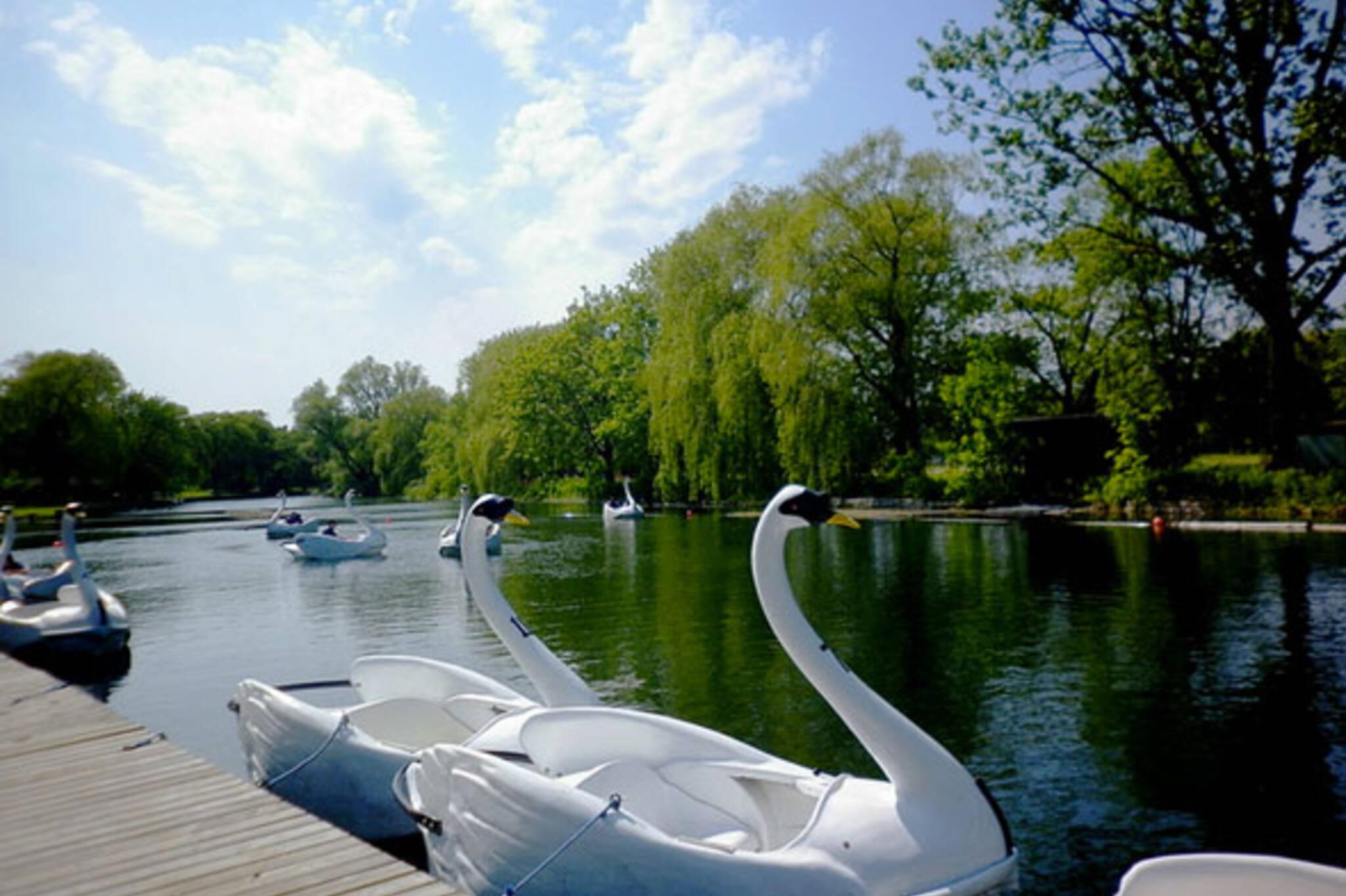 toronto swanboats