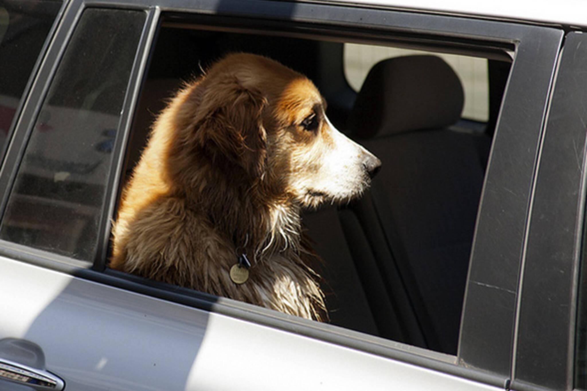 Dog limo Toronto