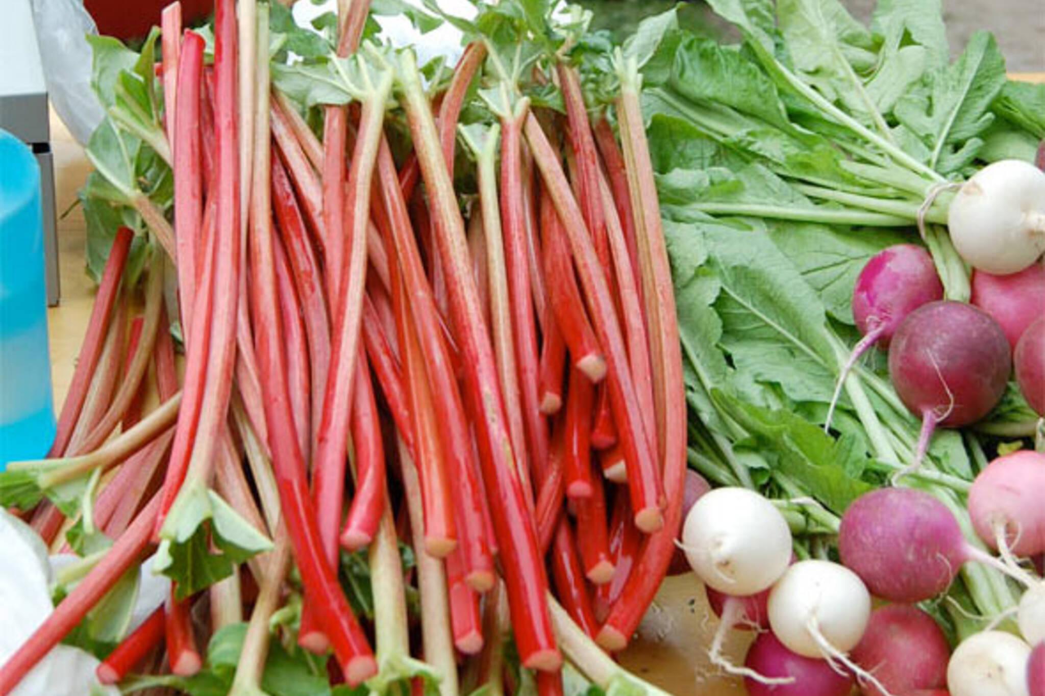 ontario rhubarb