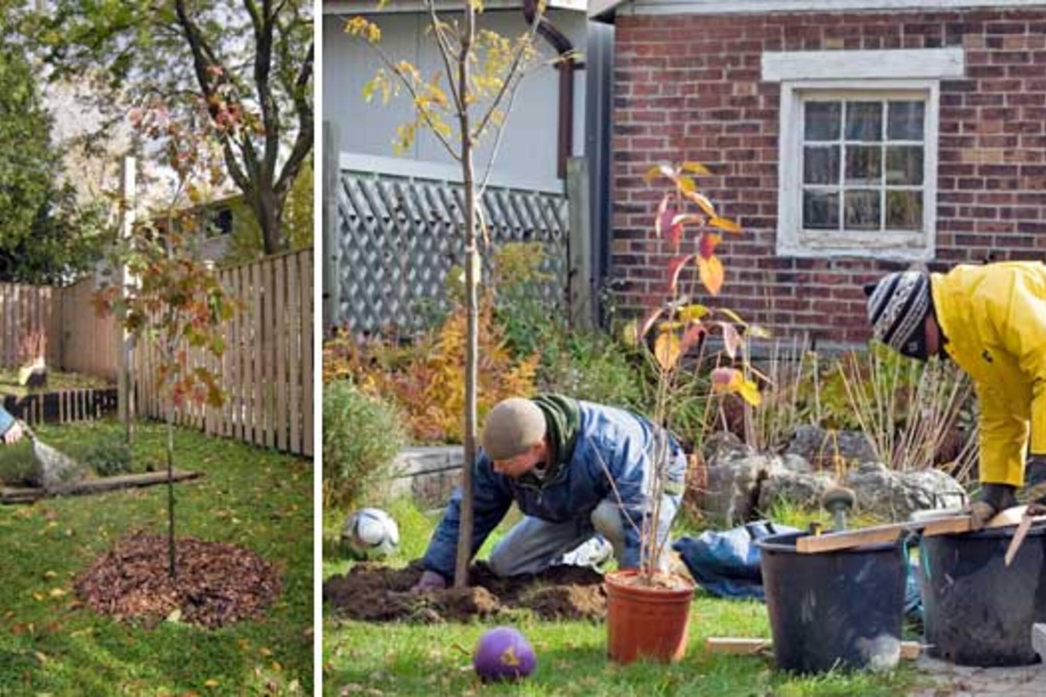 LEAF Tree Planting