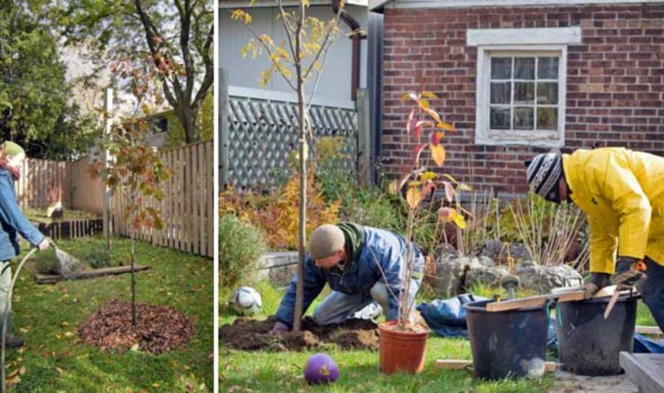 Backyard Trees Made Possible by LEAF