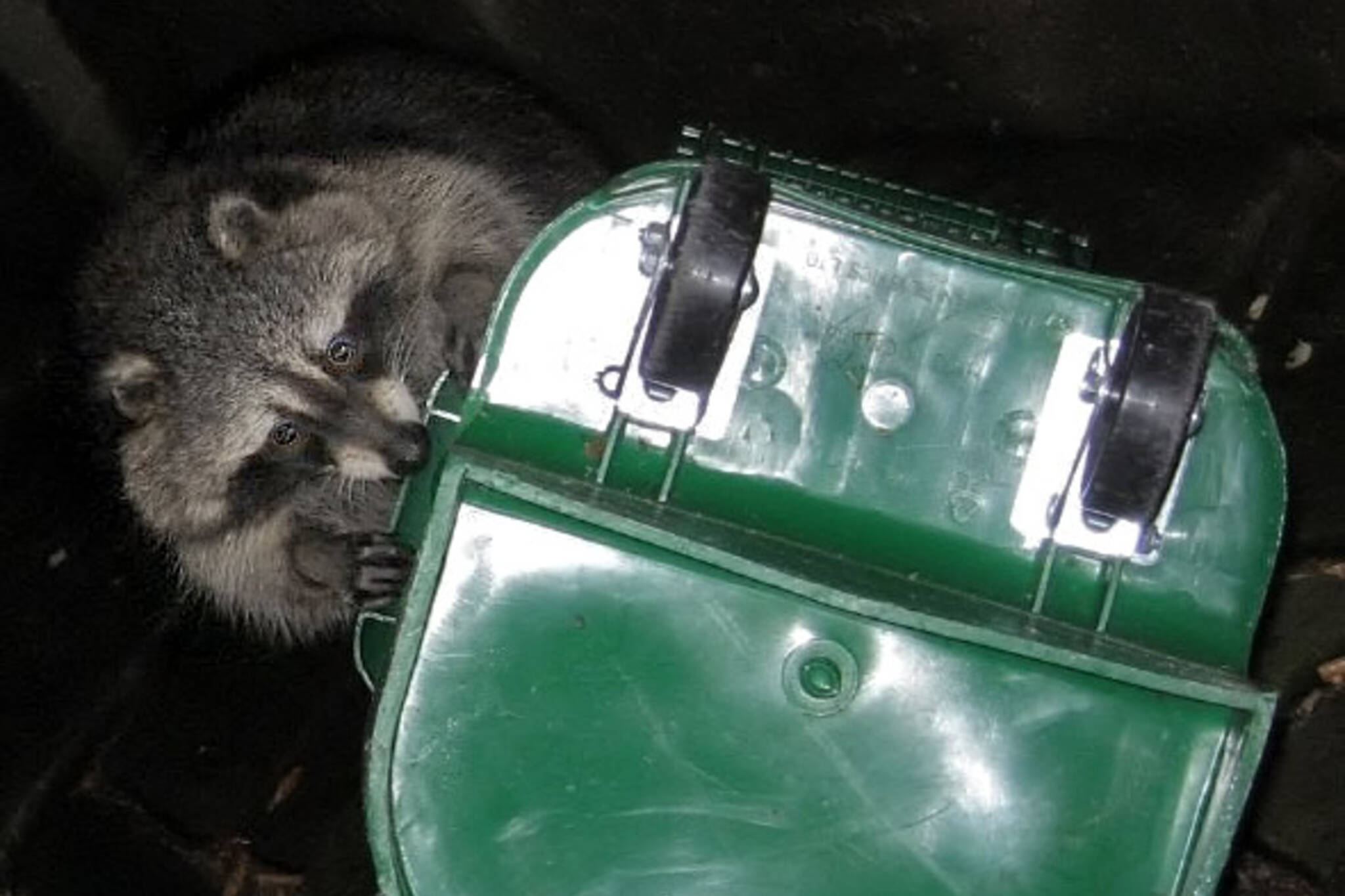 20070627_raccoon-greenbin2.jpg