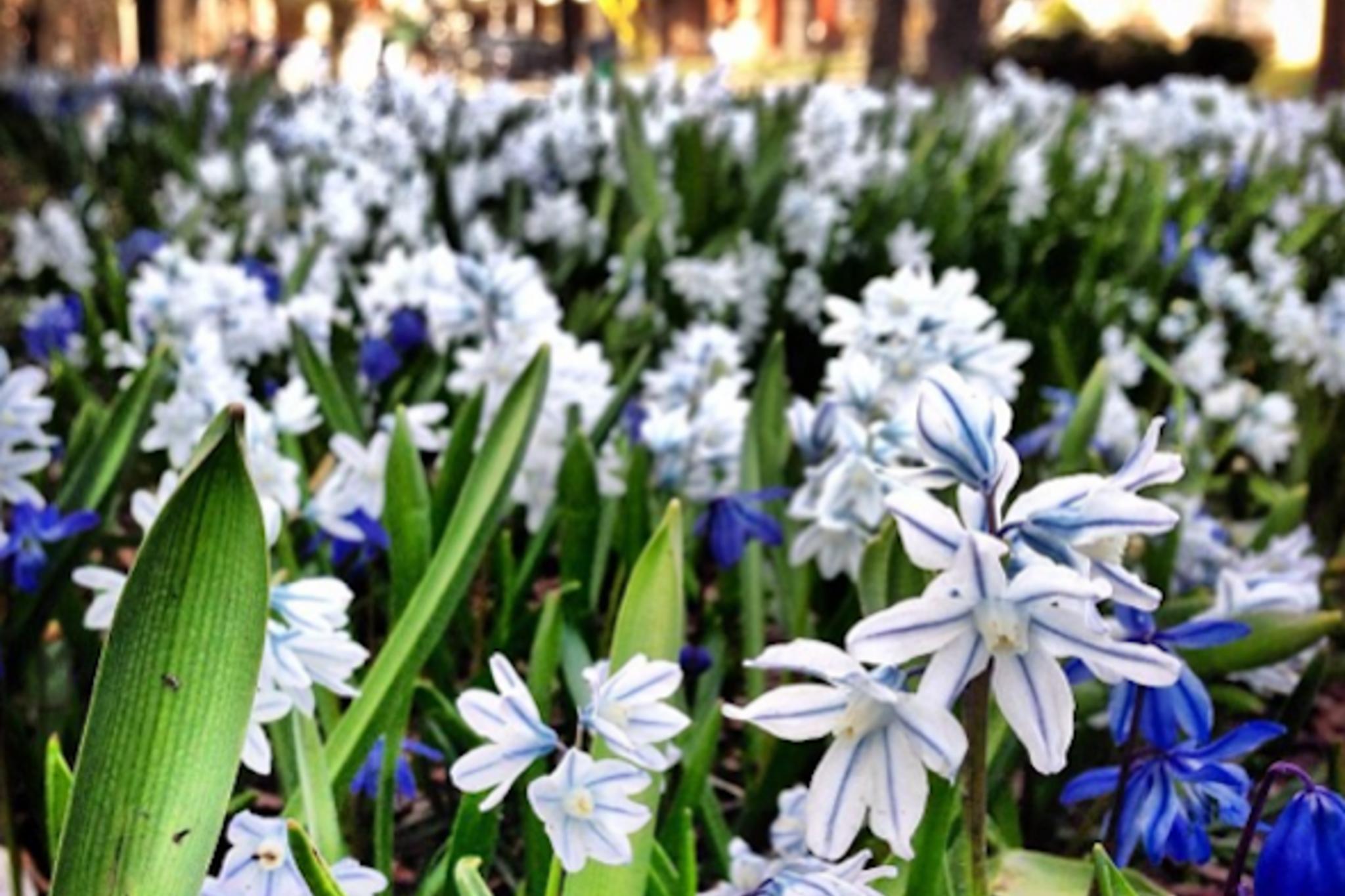 Spring Toronto Instagram