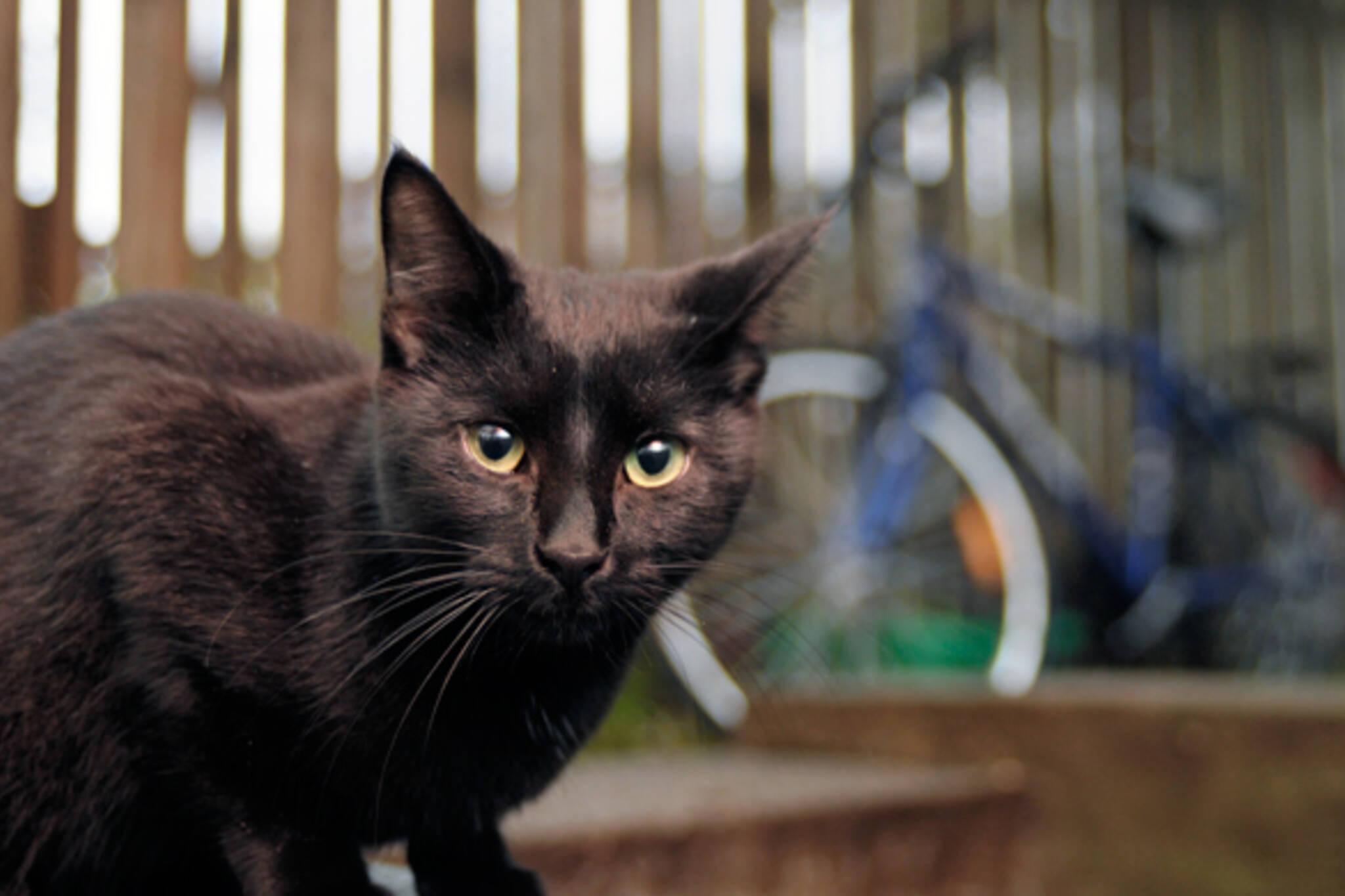 stray cats Toronto