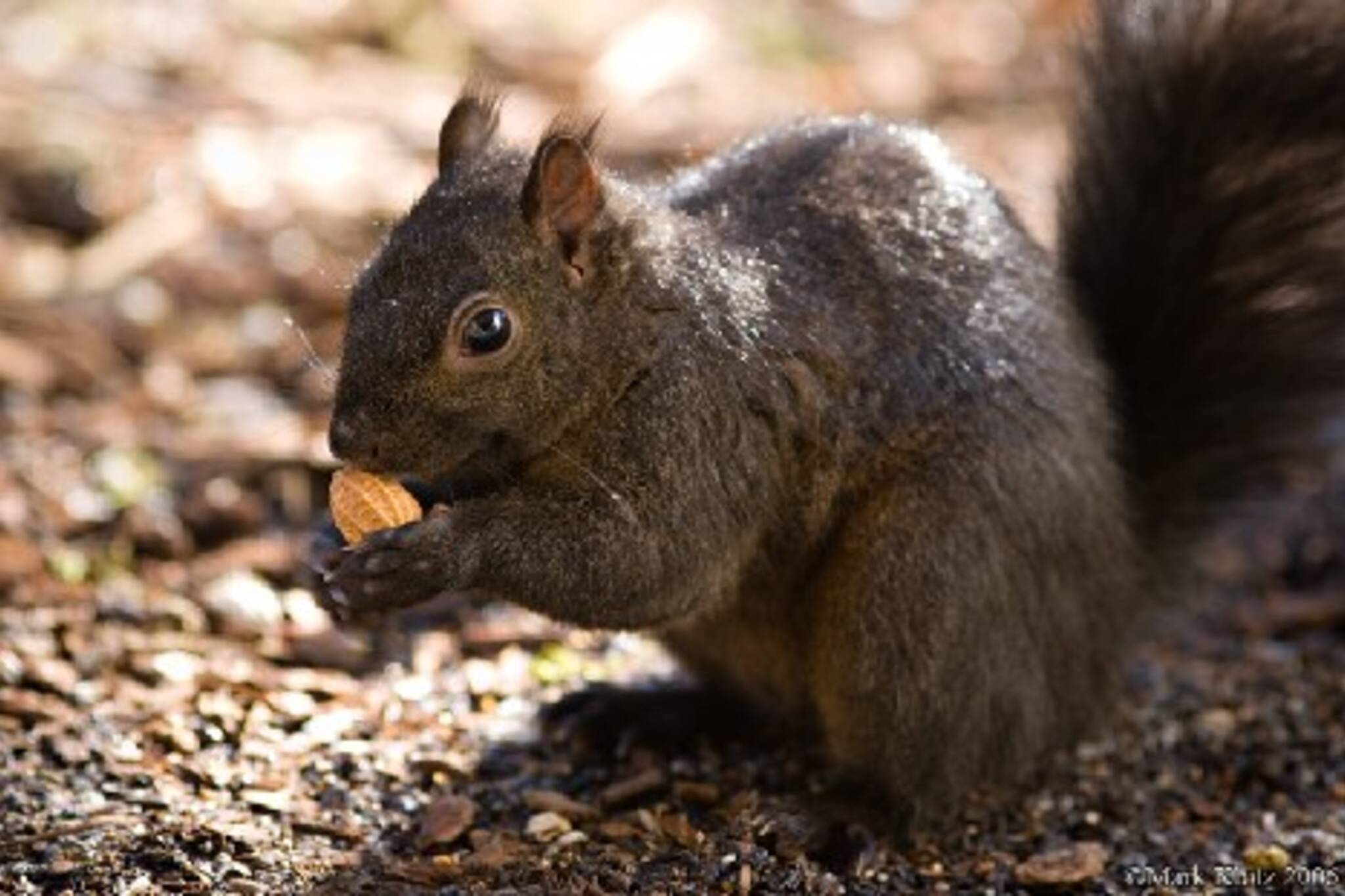 092406_squirrel.jpg