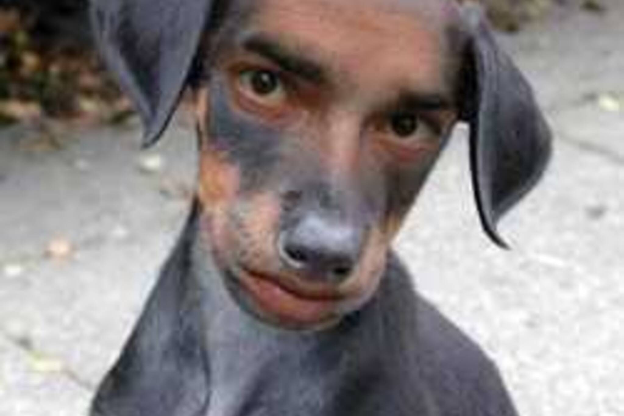 20070430_baddog_via_beagleblogger.jpg