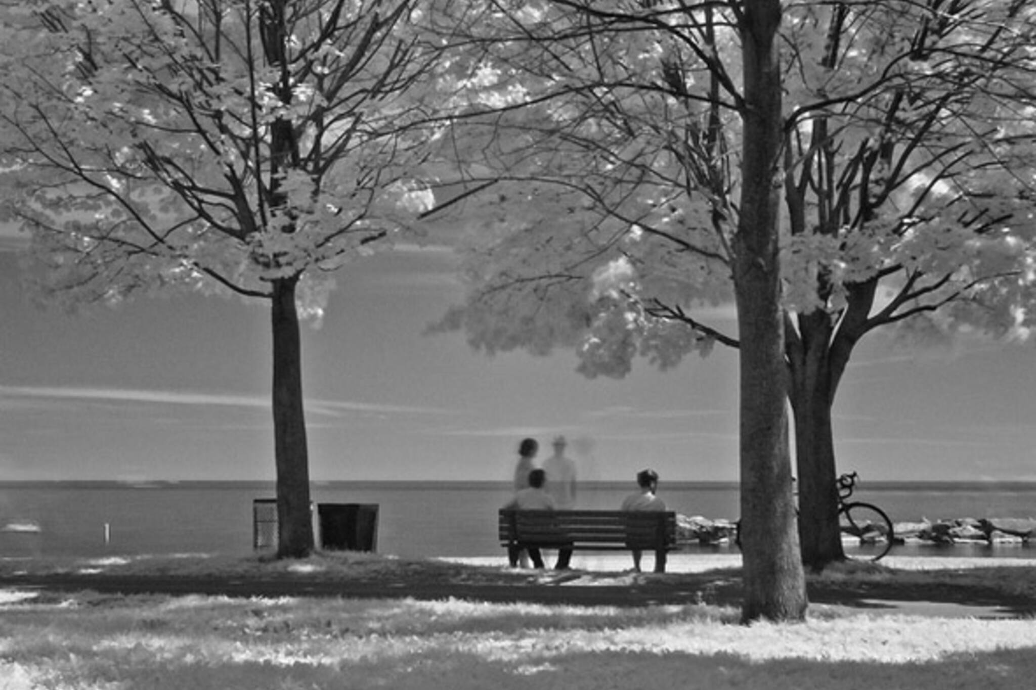 bench, park, ghost