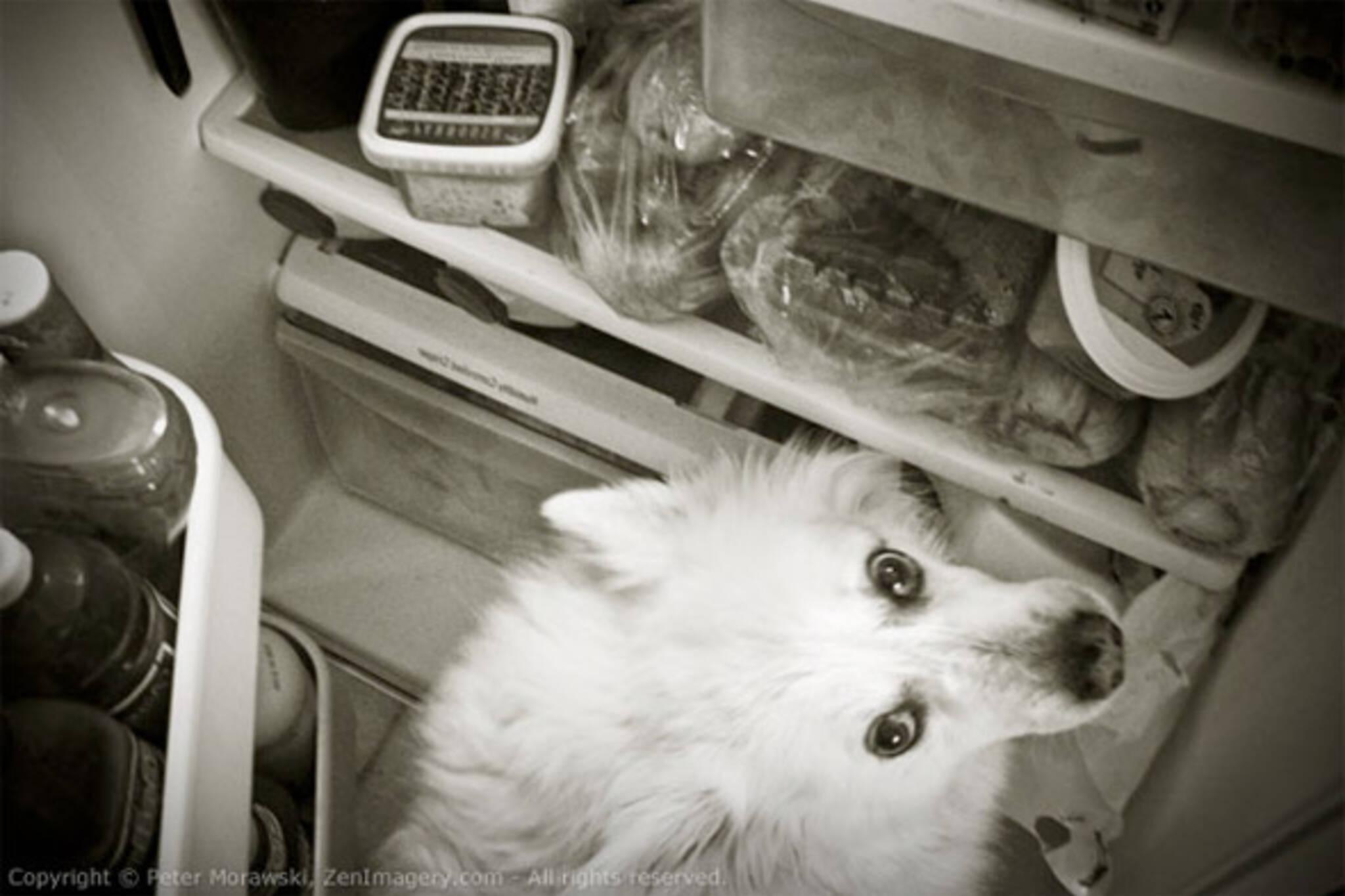 dog in fridge