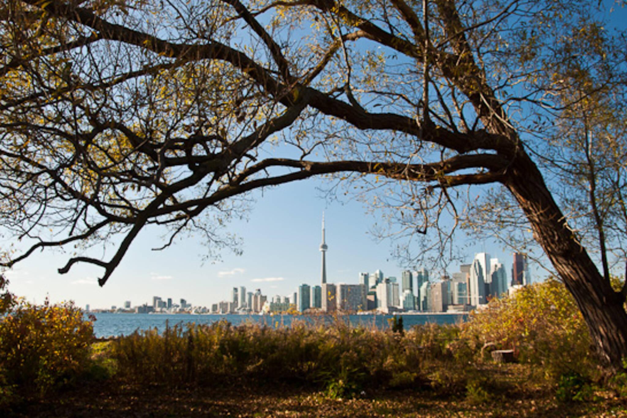 Toronto Islands Fall