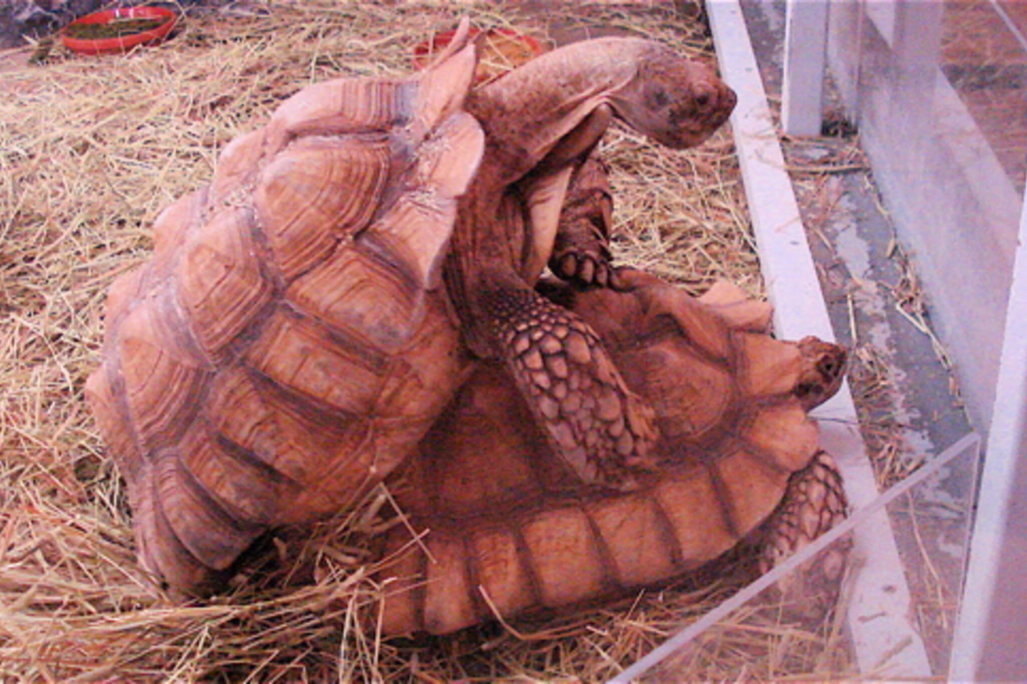 20080324-tortoises.jpg