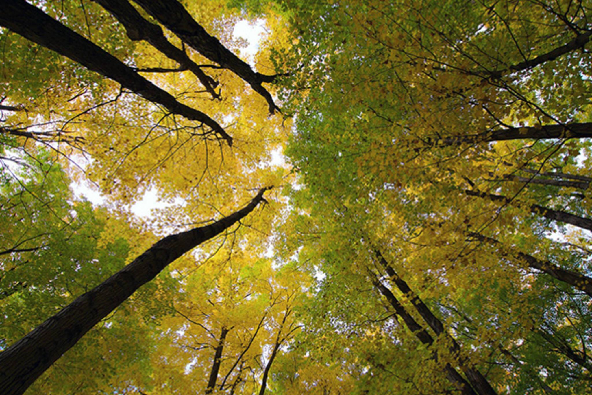 fall woods toronto