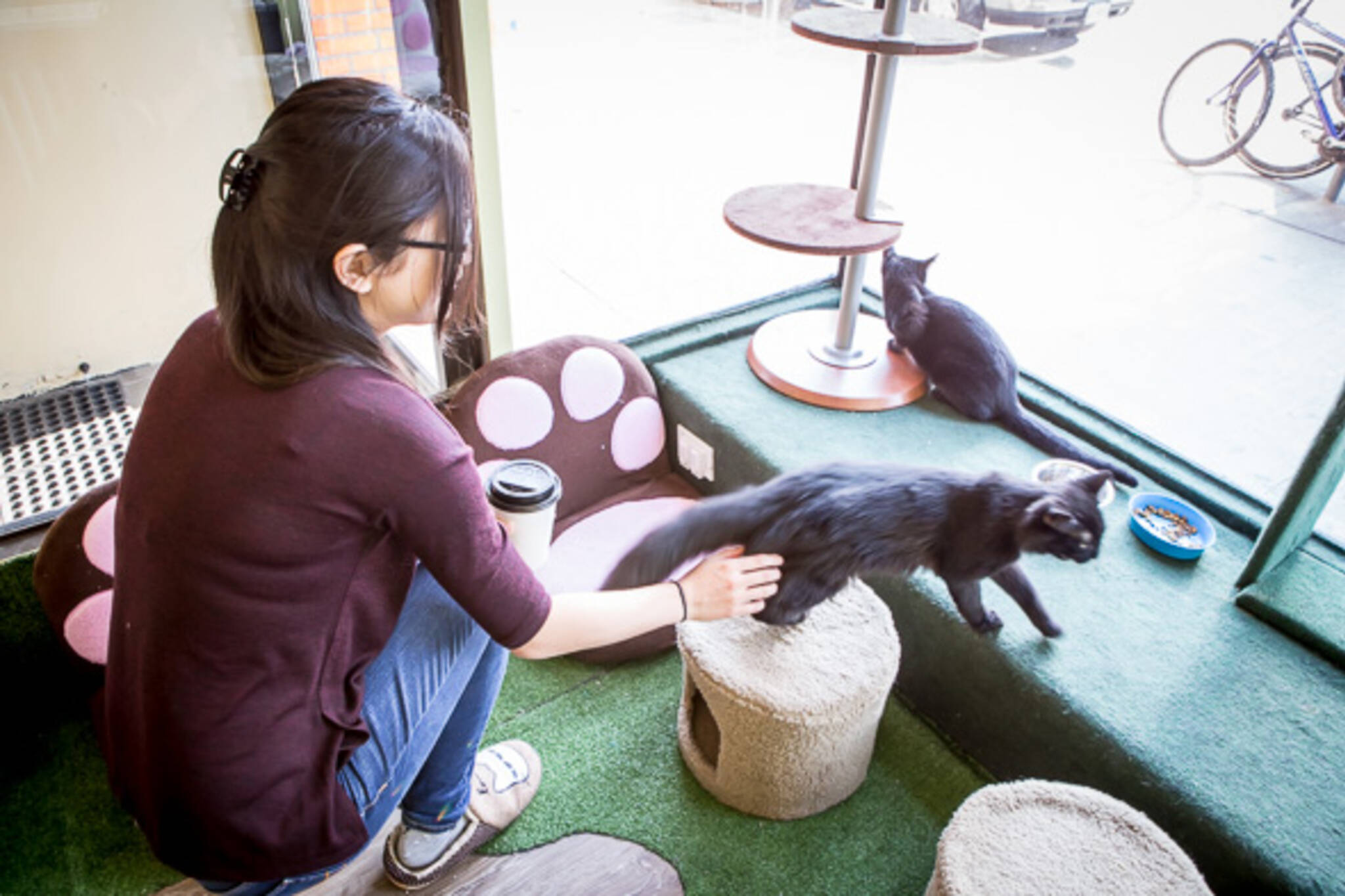 Tot The Cat Cafe Controversy