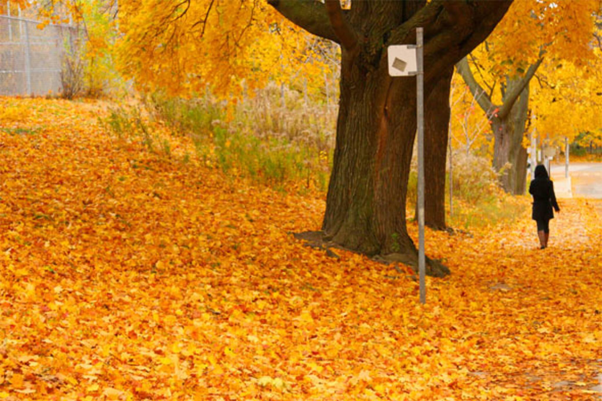fallen leaves toronto