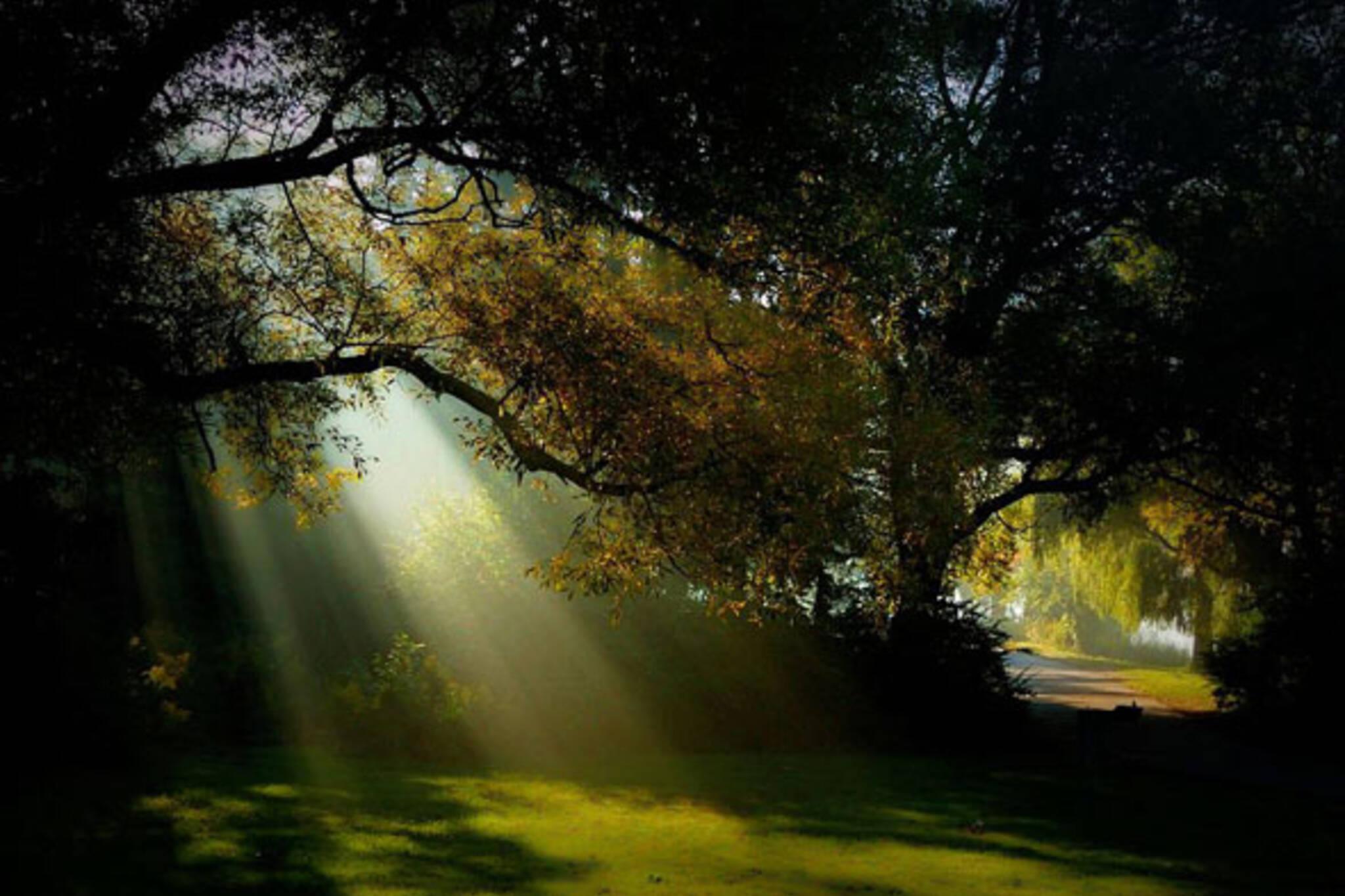 toronto park sunbeam