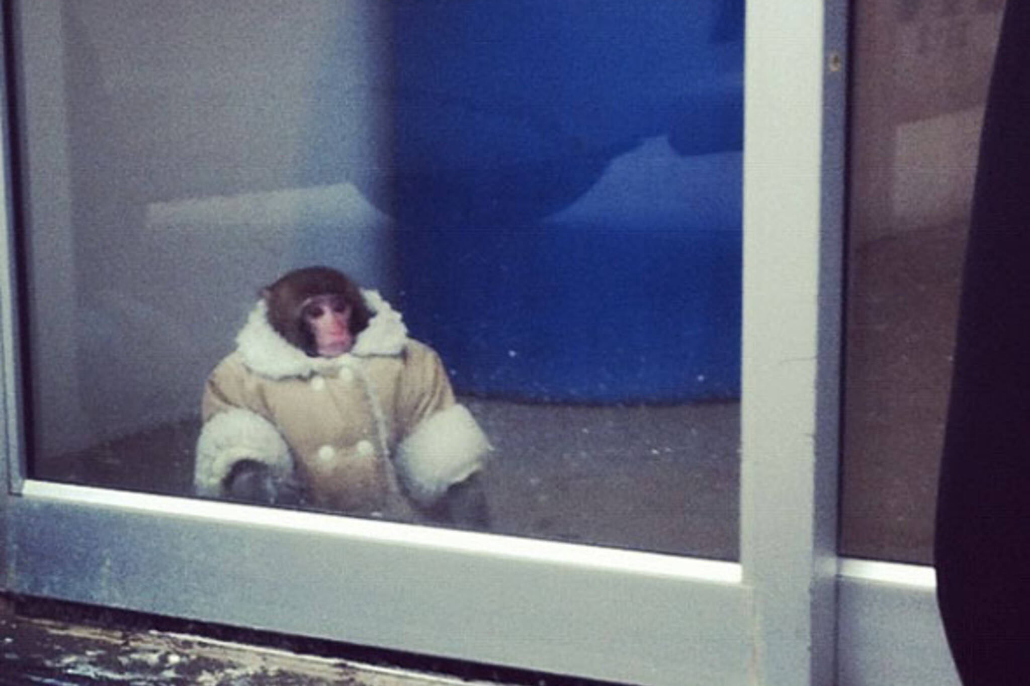 ikea monkey toronto