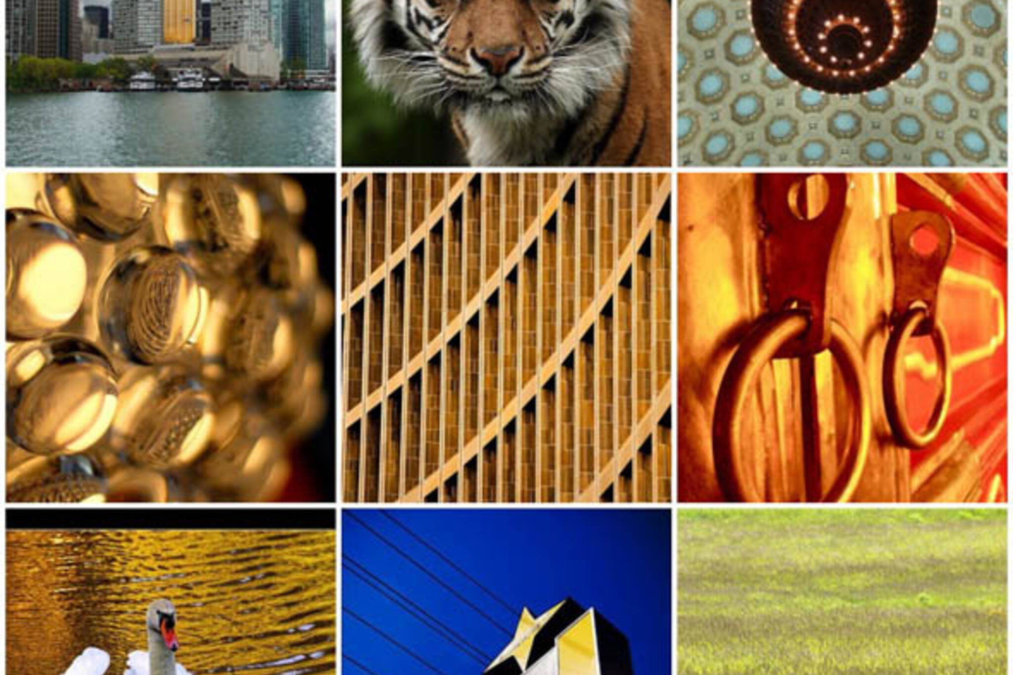 Flickr Forum: May 30th, 2008 - Gold