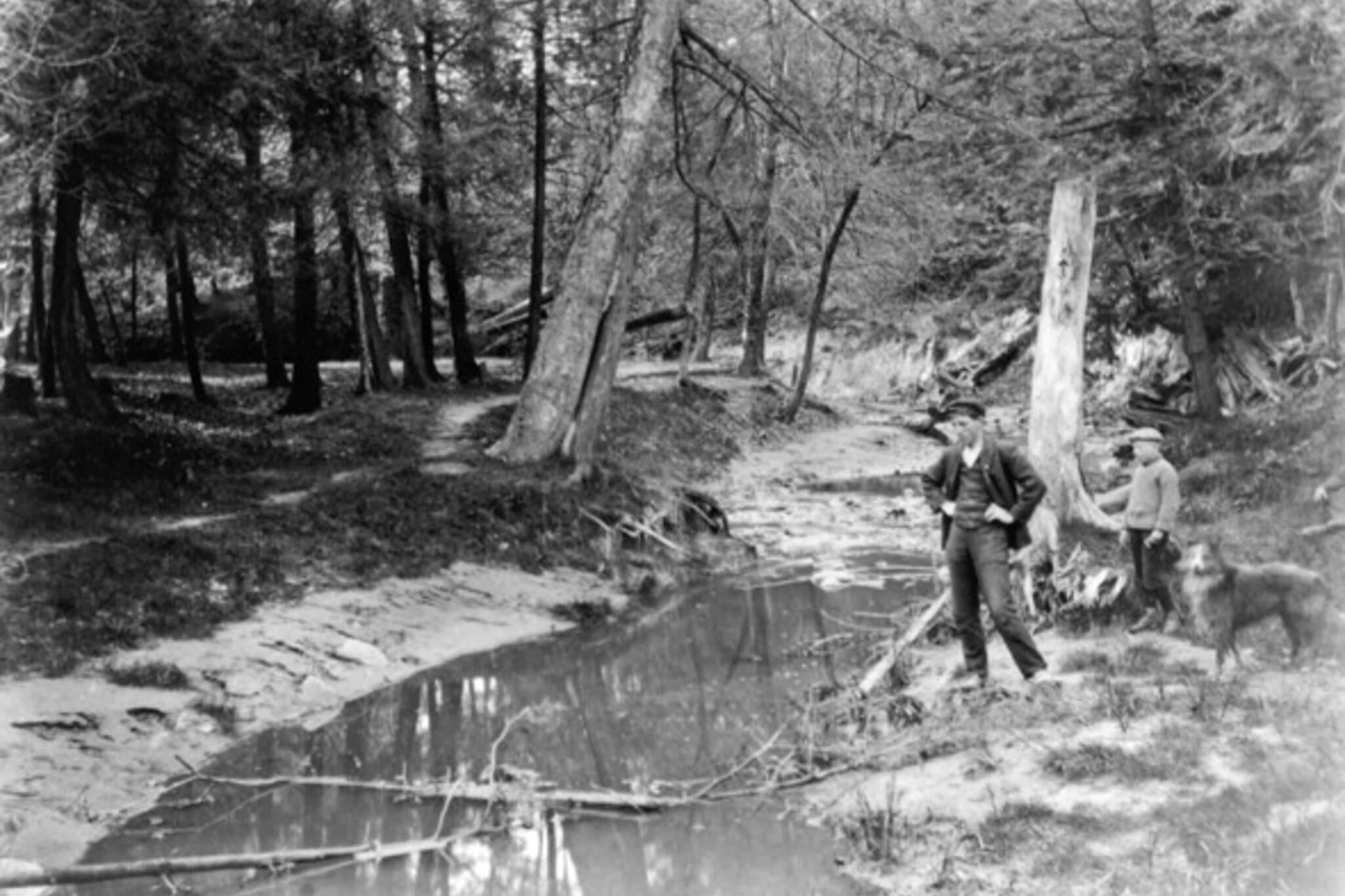 Garrison Creek Trees Stream