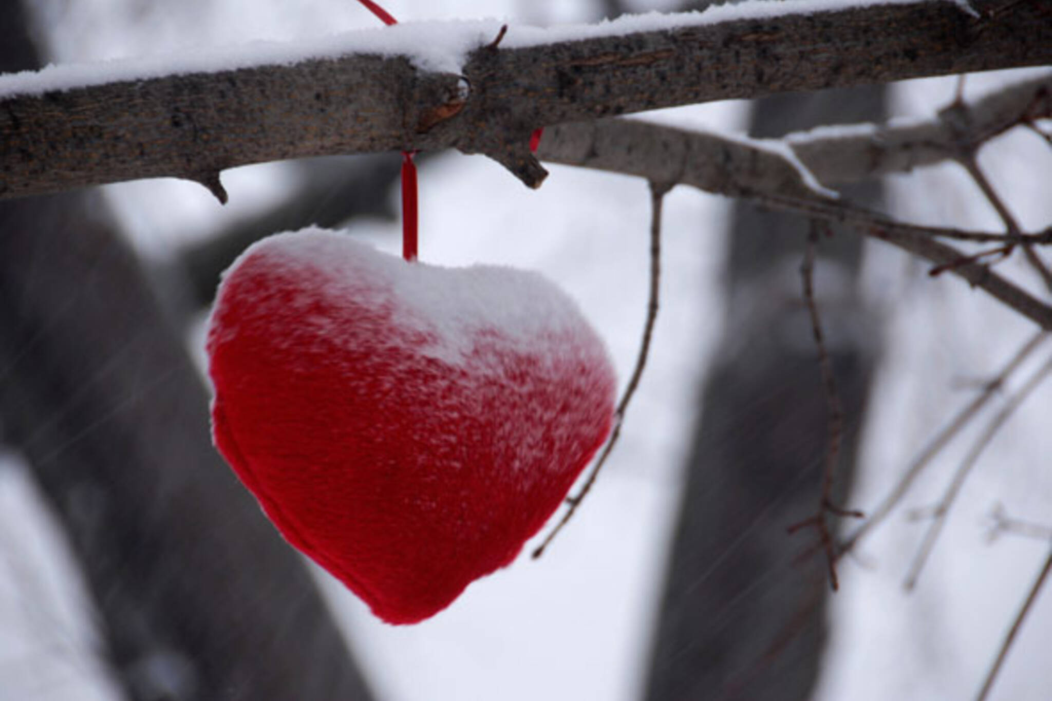 toronto winter hearts in tree