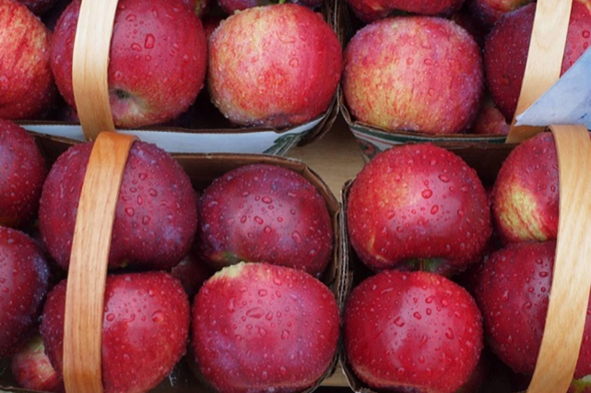 Apples Toronto autumn