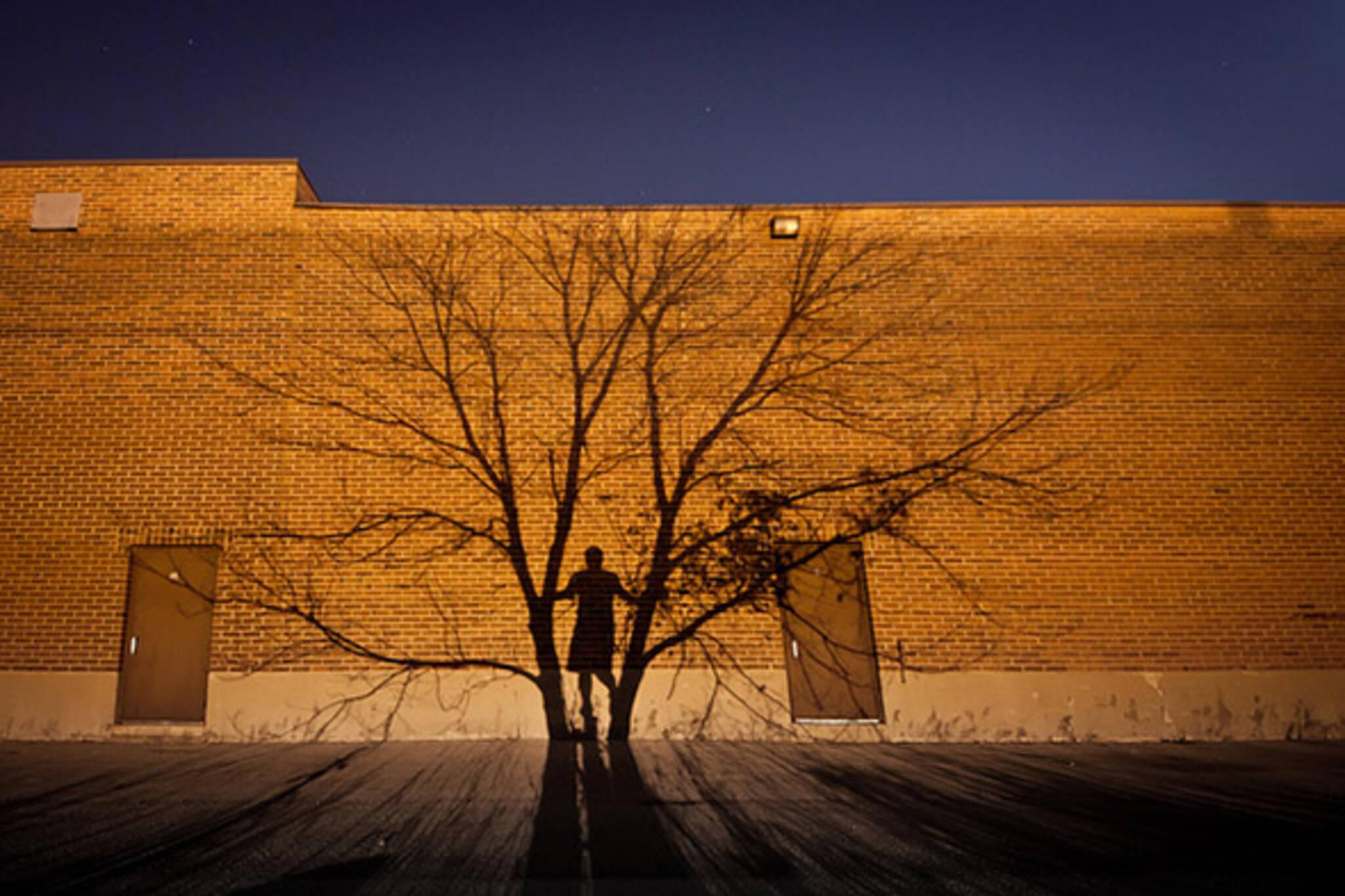 tree, shadow, man
