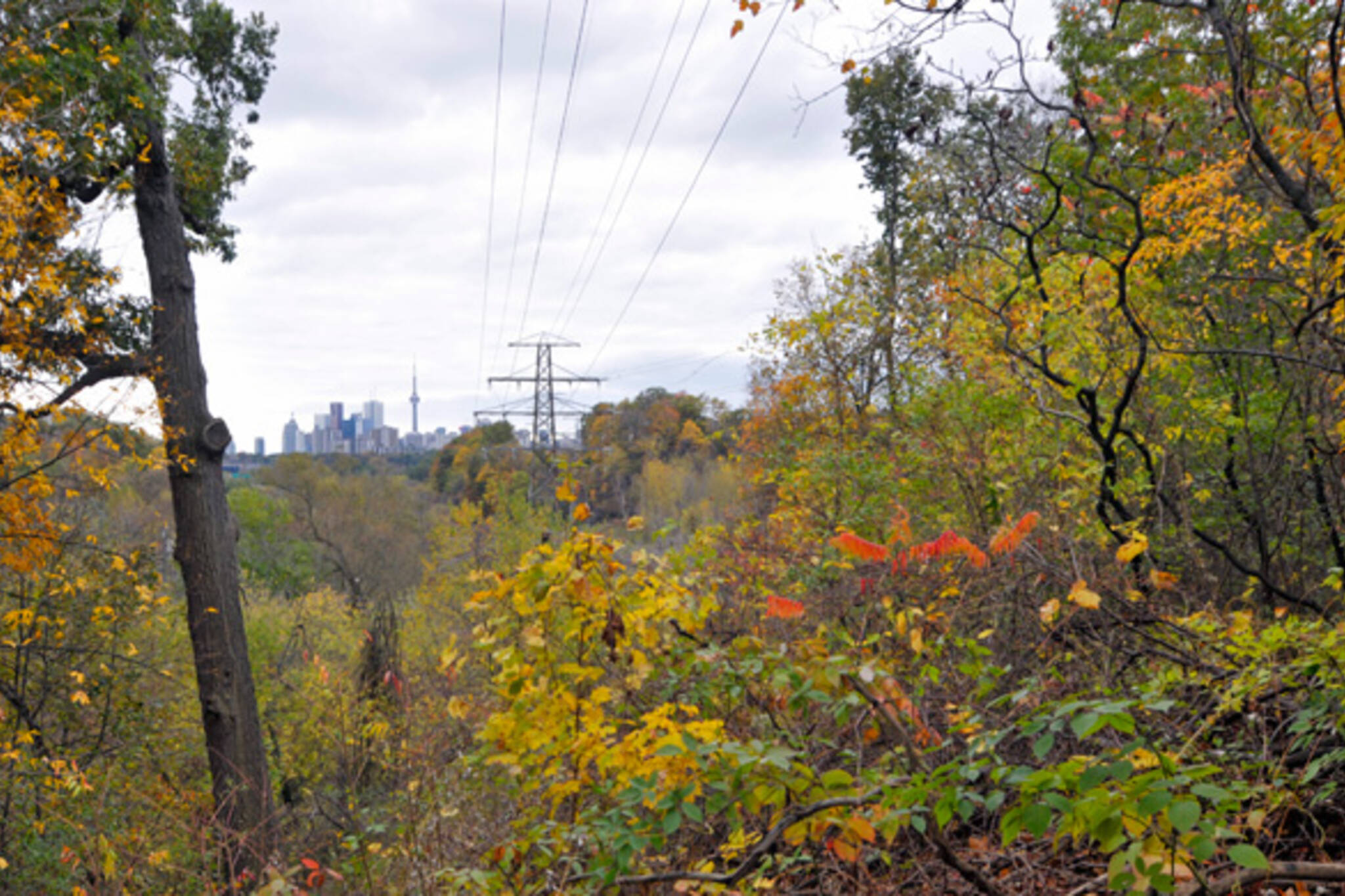 Crothers' Woods Toronto