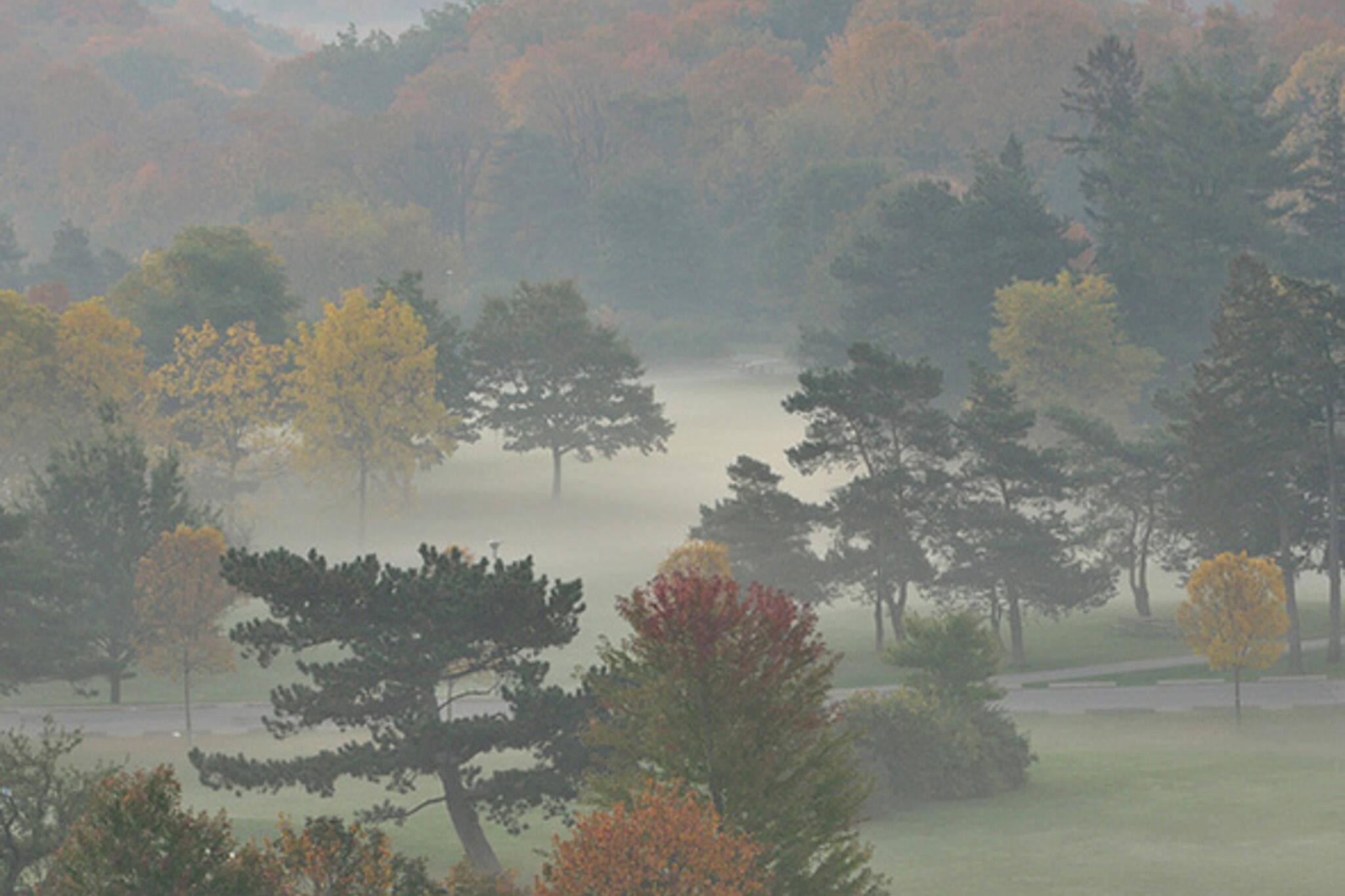 fall, fog, trees
