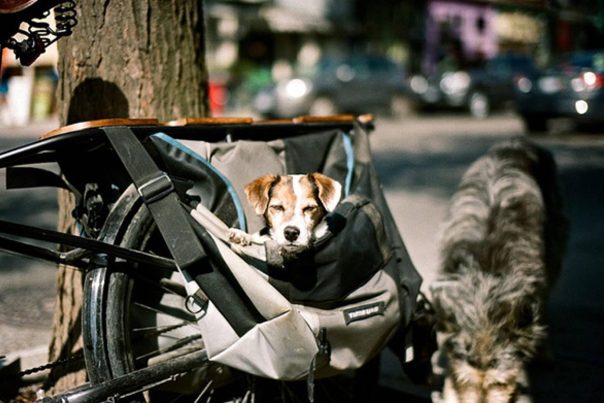 dog, bag, bike