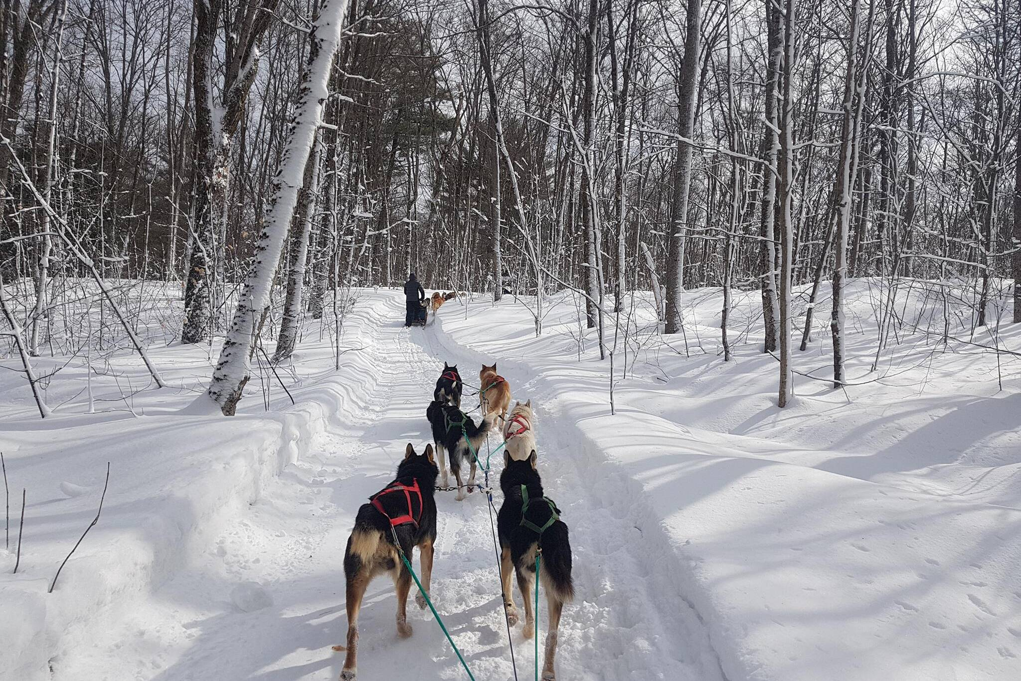 North Ridge Ranch, Dogsledding, Huntsville