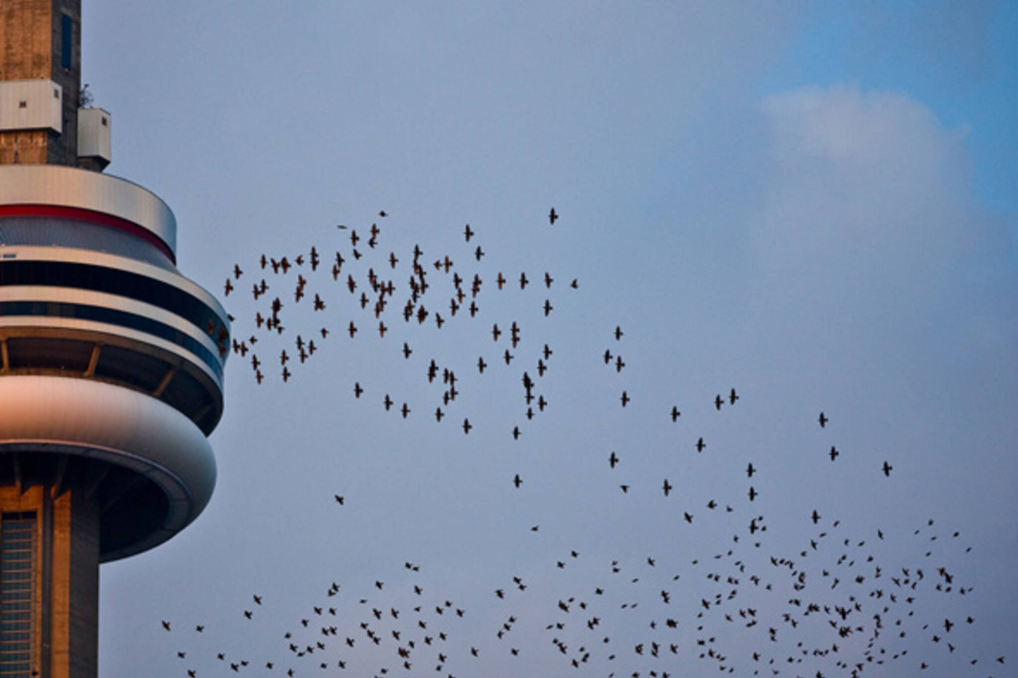 CN Tower Toronto Birds