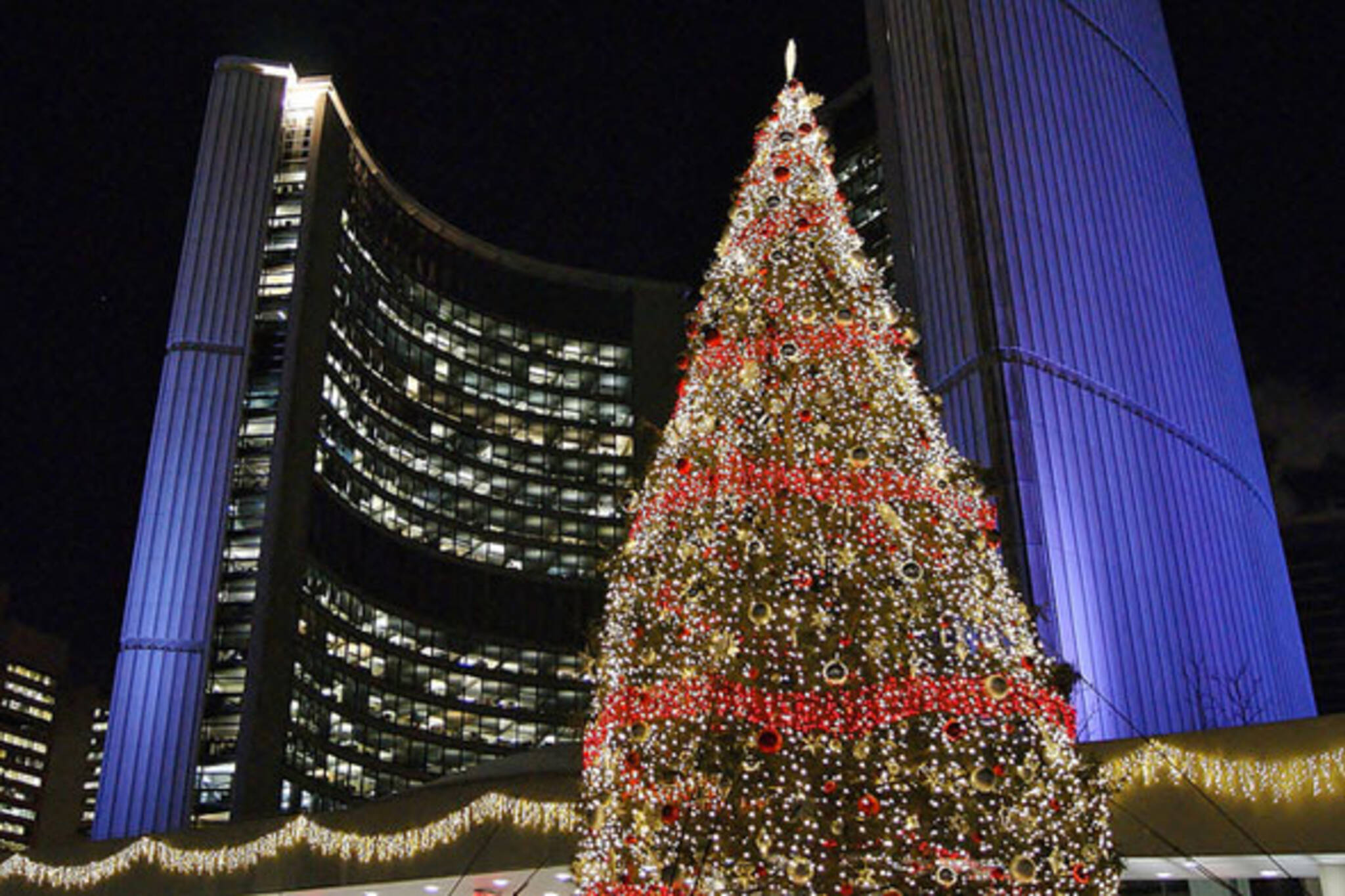 The Story Of The Toronto City Hall Christmas Tree