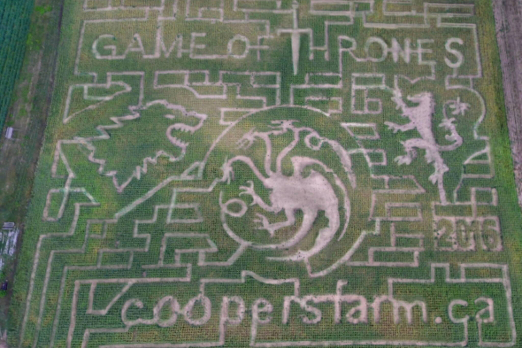 game of thrones corn maze