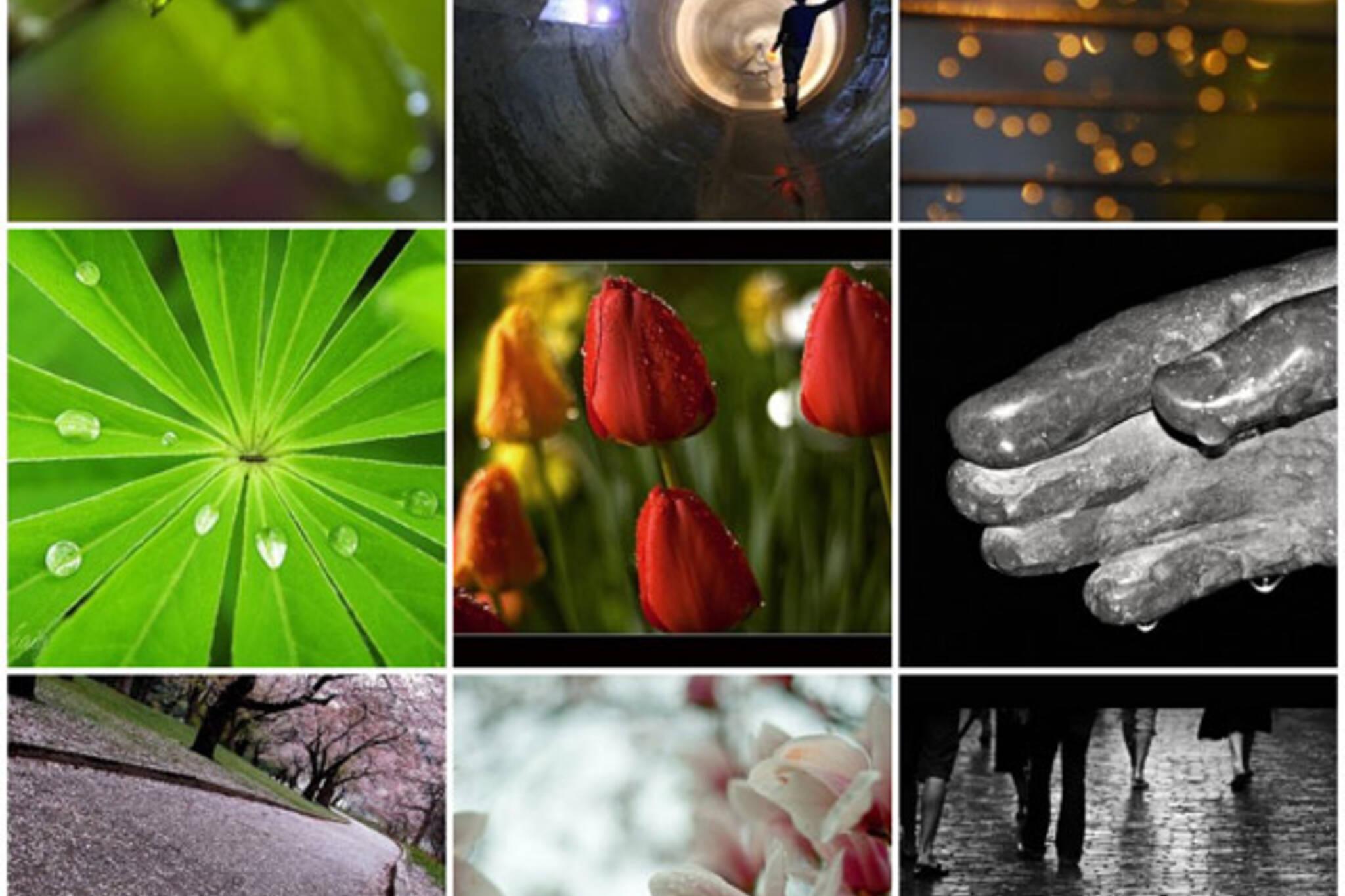 Flickr Forum: May 16th, 2008 - Rain