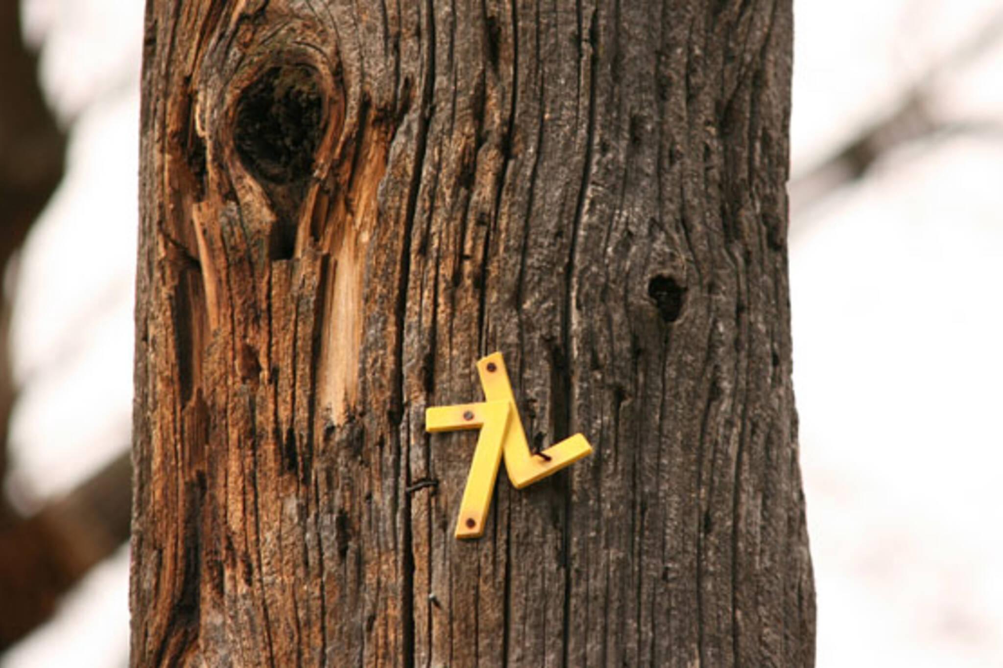 tree 7L
