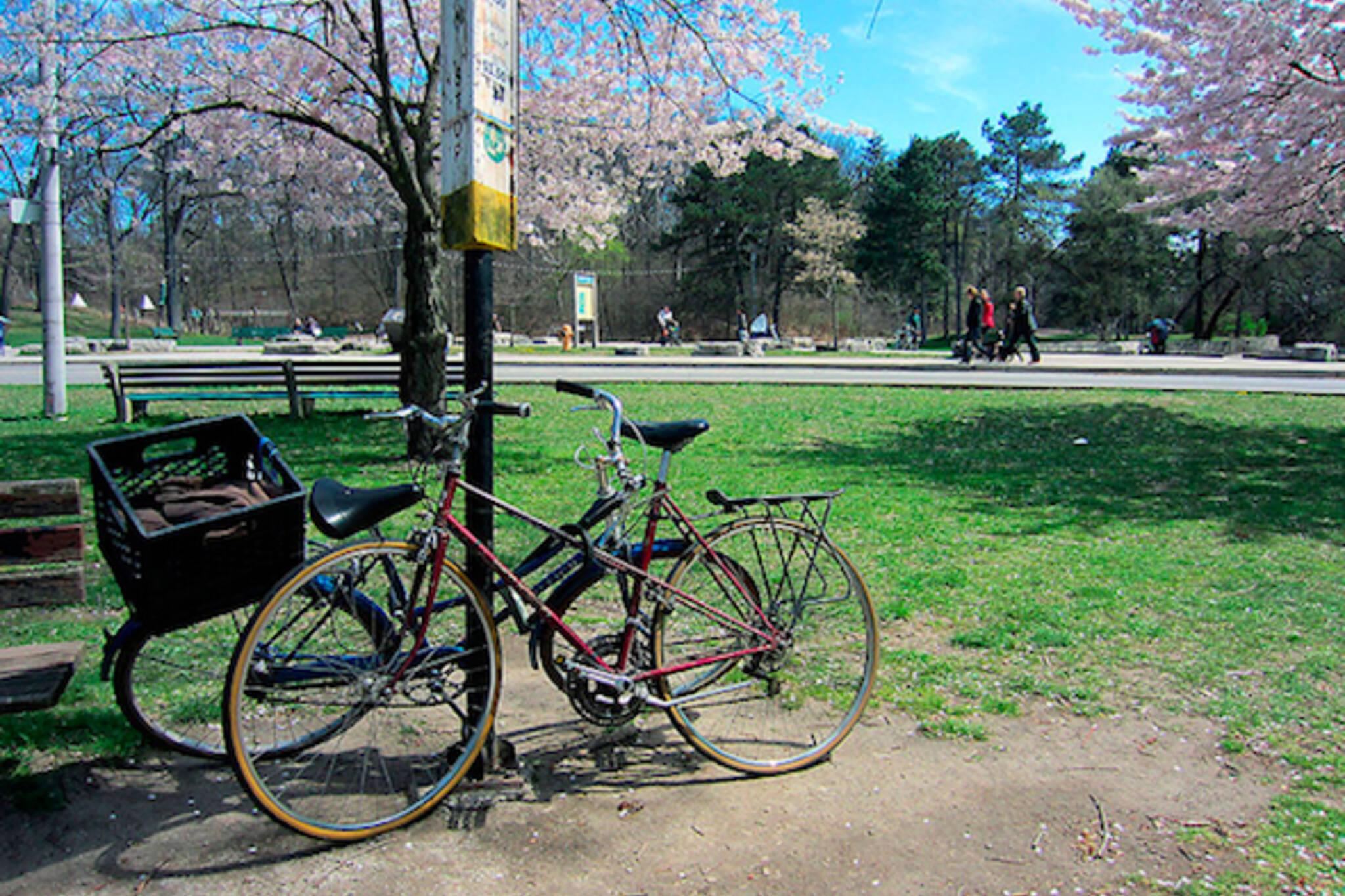 Morning Brew Bikes Sakura