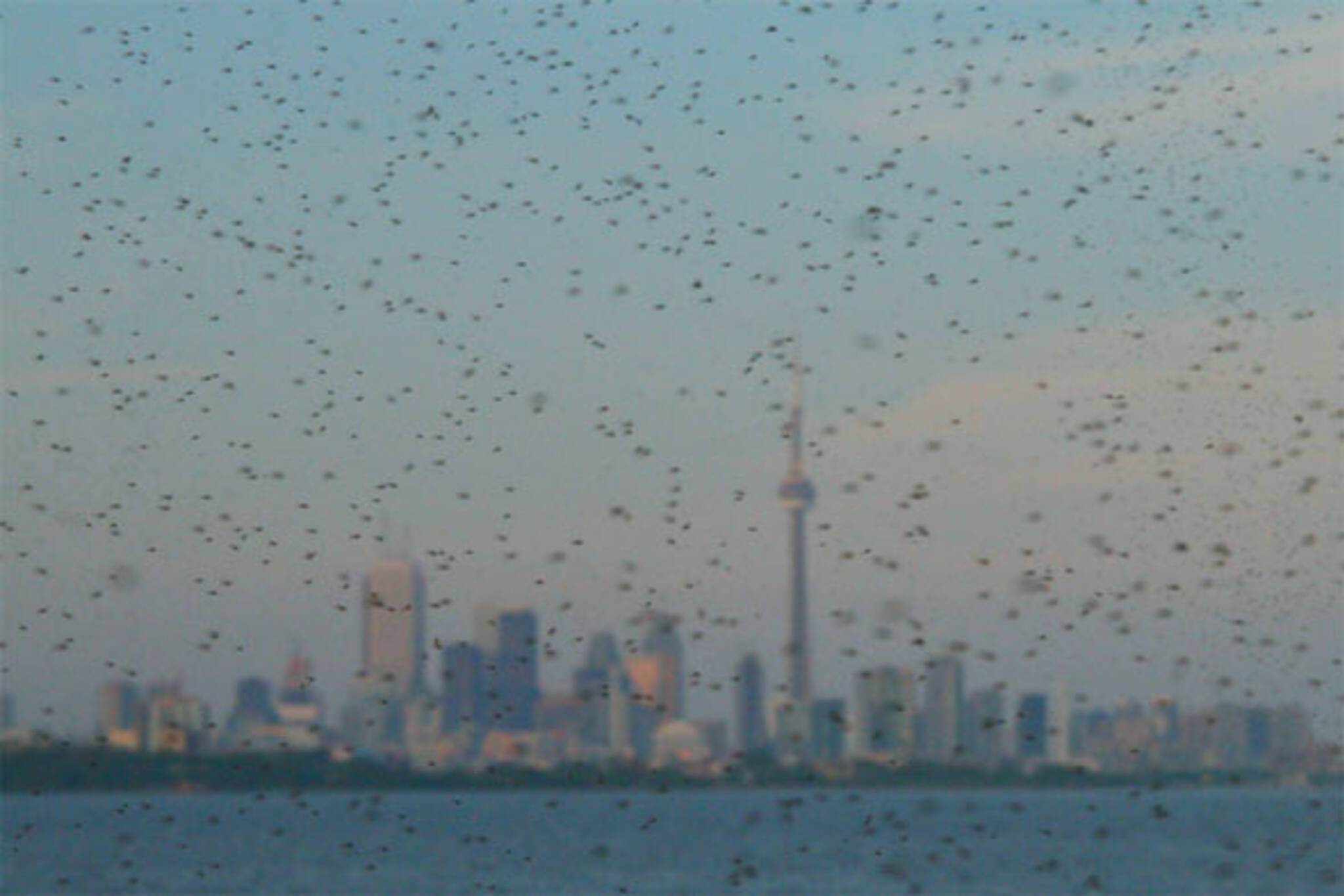 toronto mosquitoes