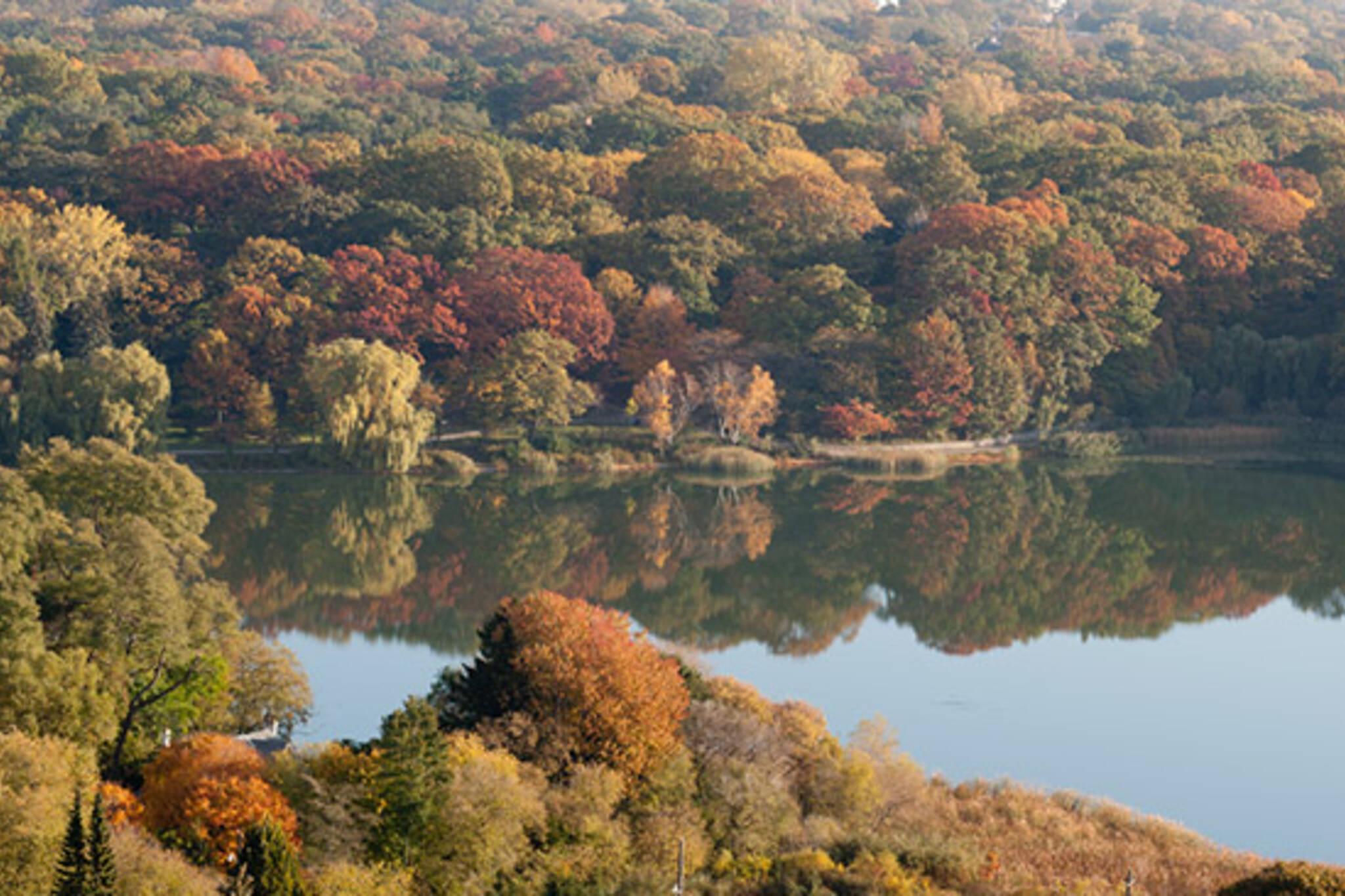 park, fall, colours