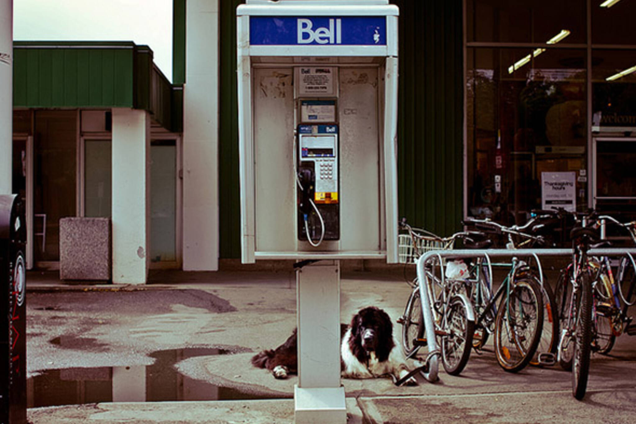 dog, phone, booth