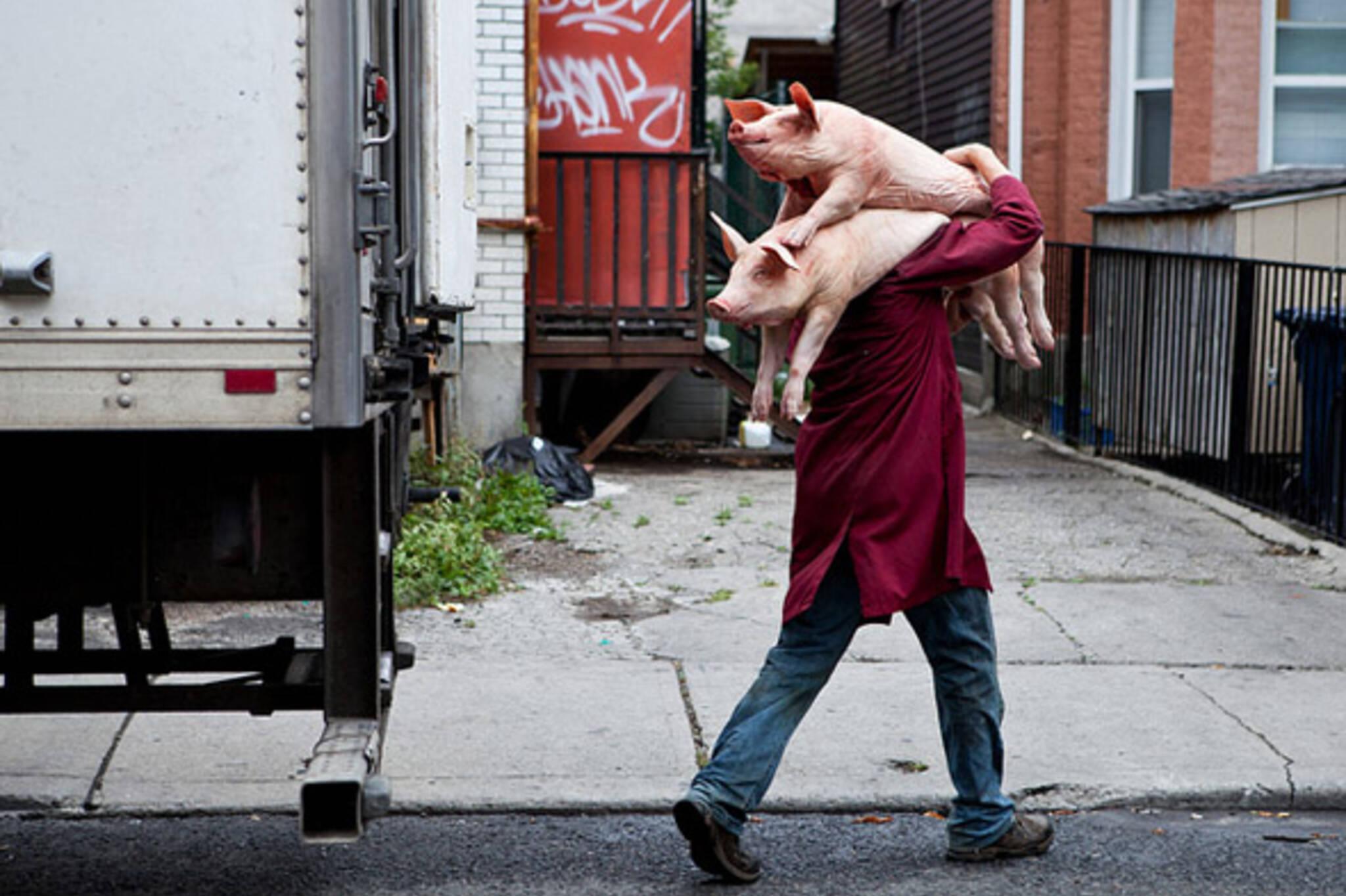 pork, chinatown, pigs