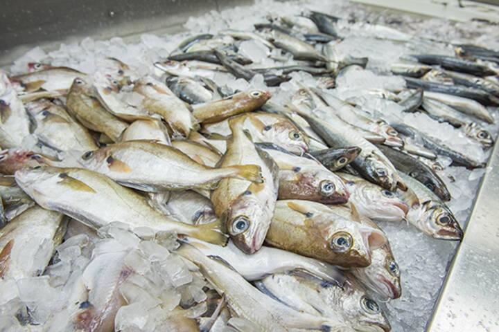 Osler Fish Market