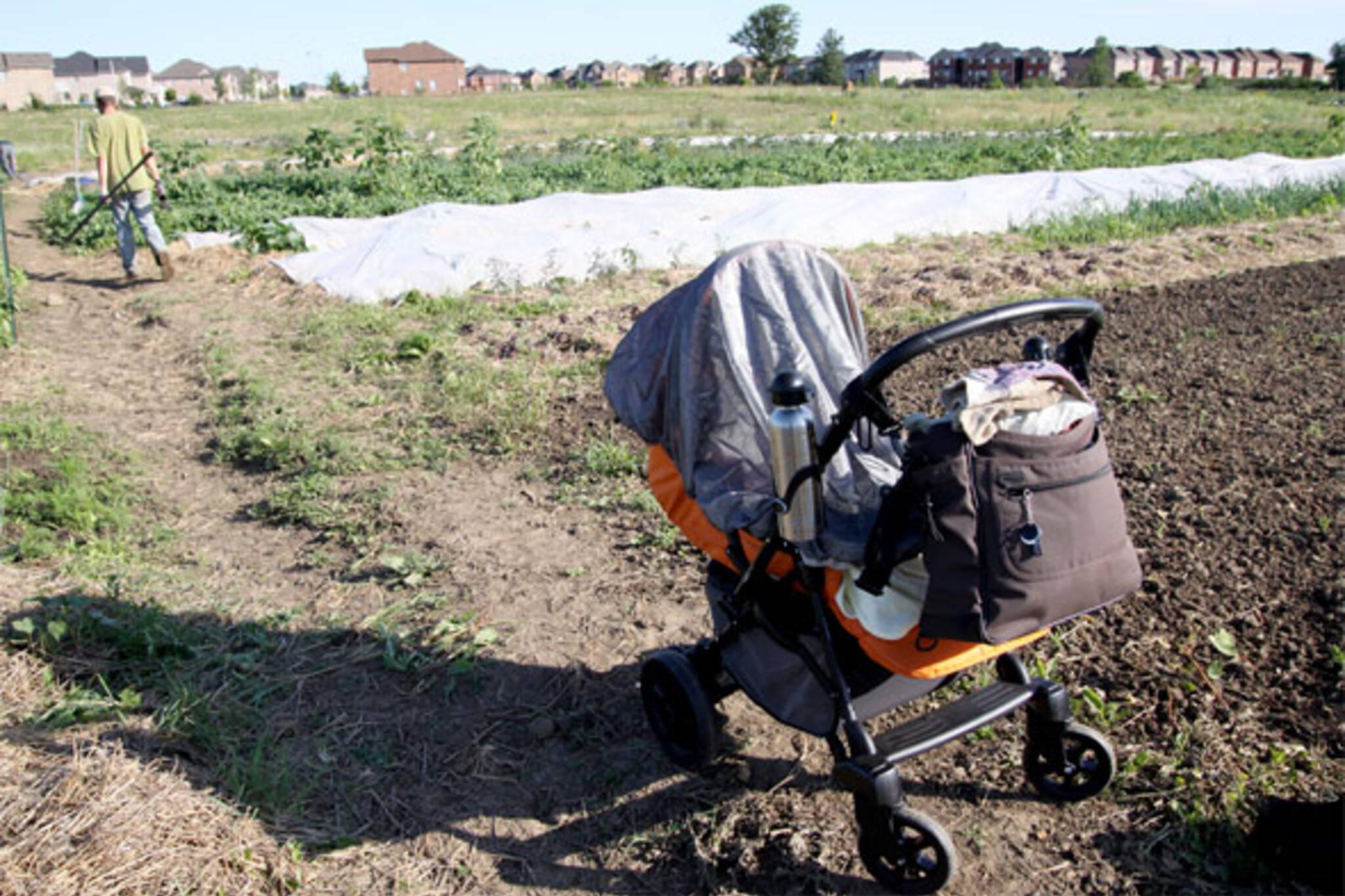 the cutting veg brampton farm