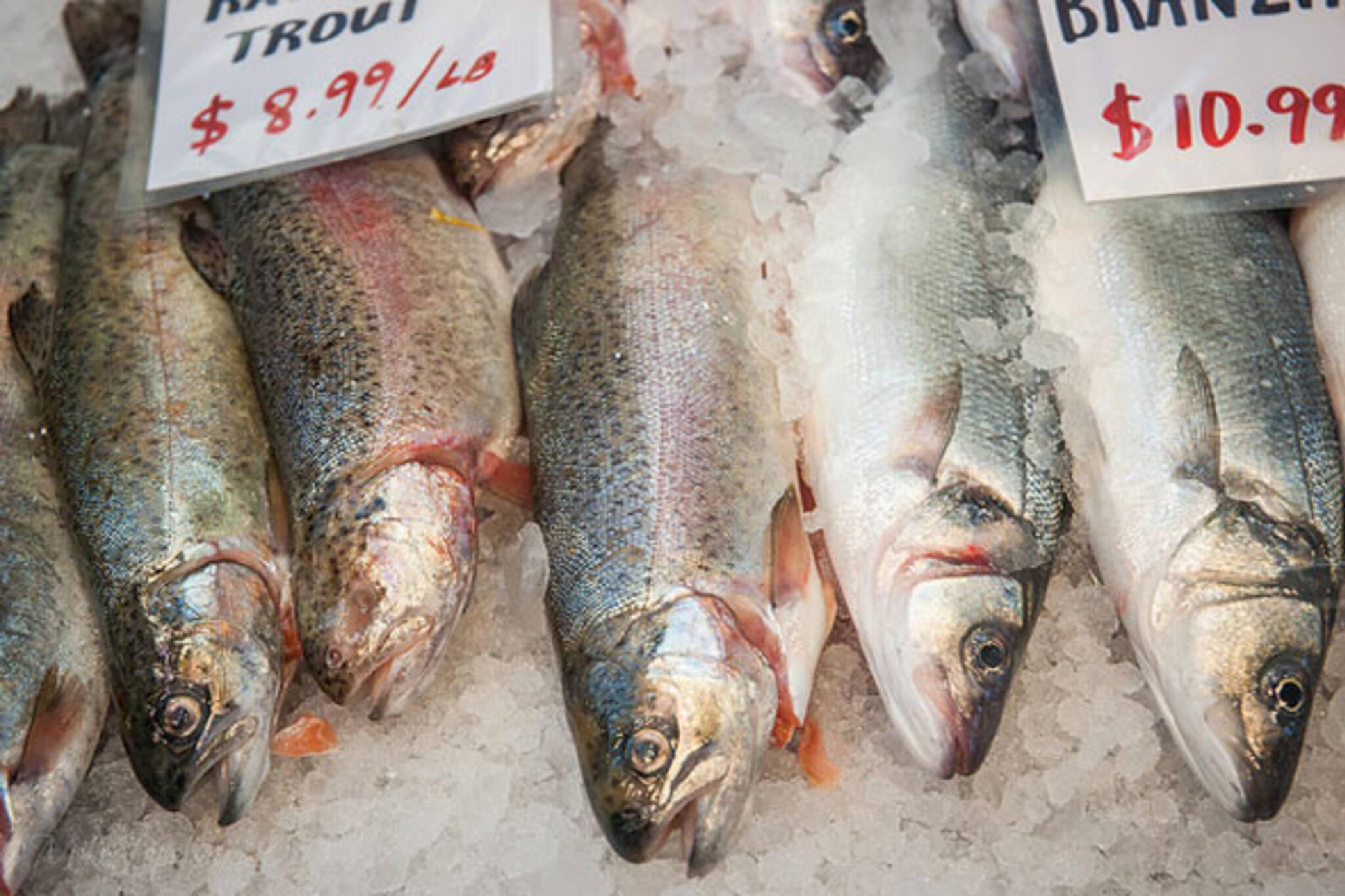 toronto fish