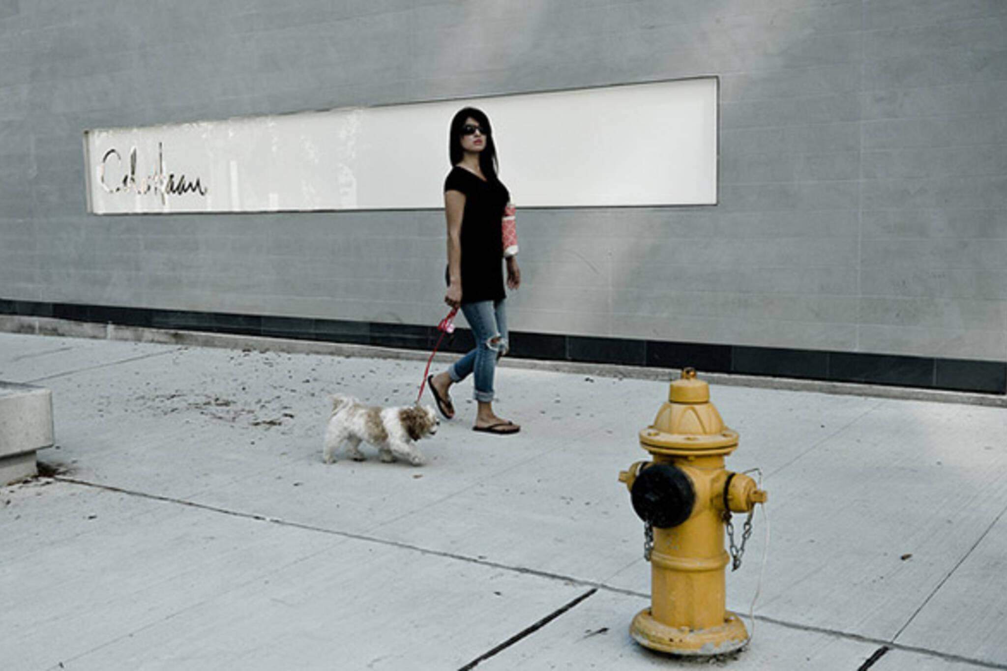 street. dog, fire