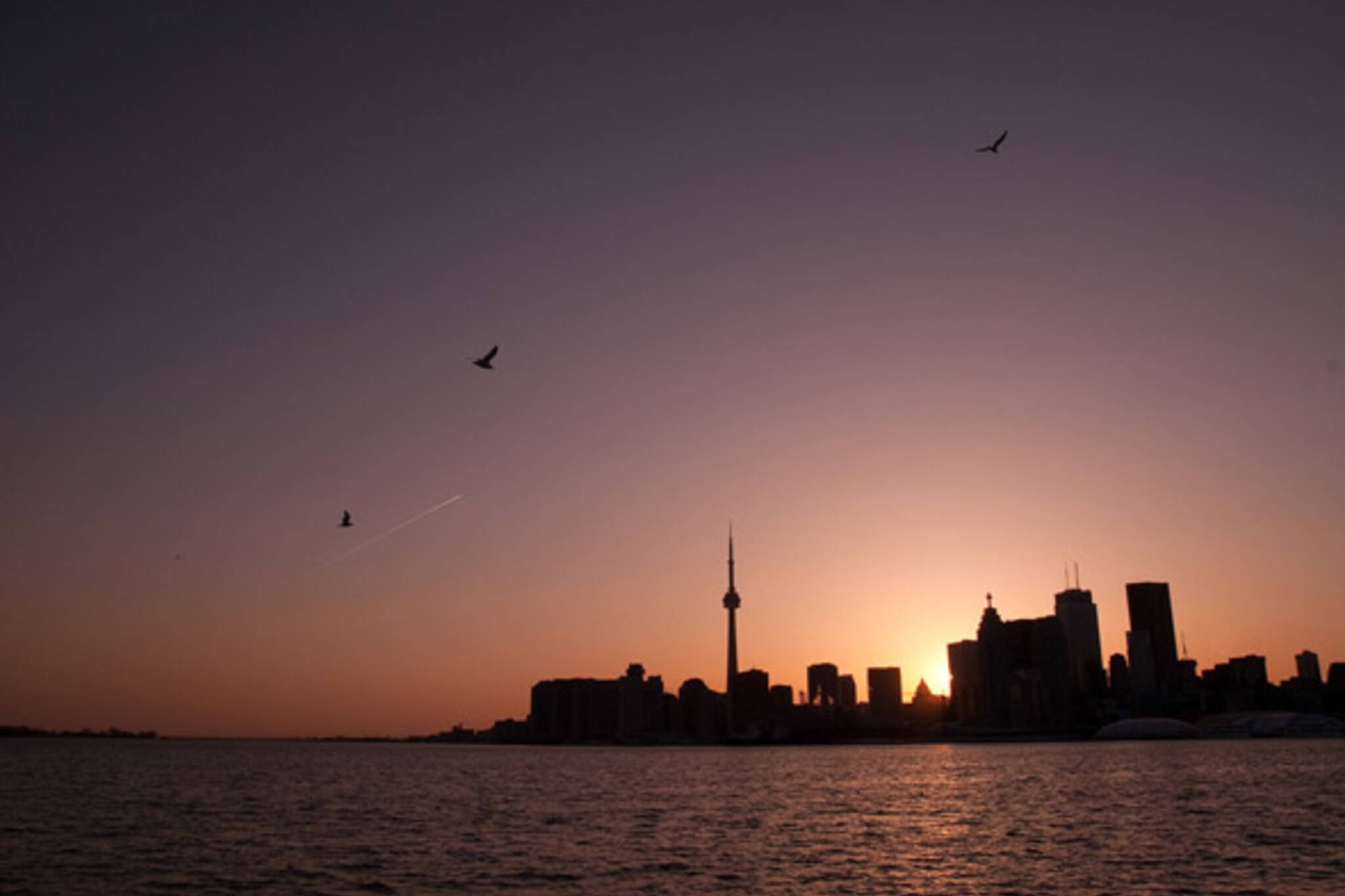 Toronto Skyline Sunset Birds