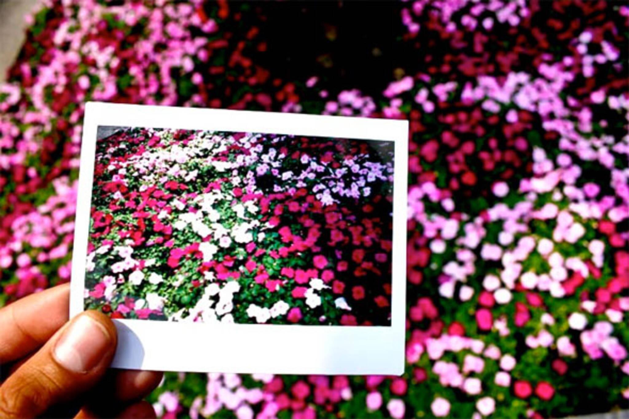 polariod toronto flowers