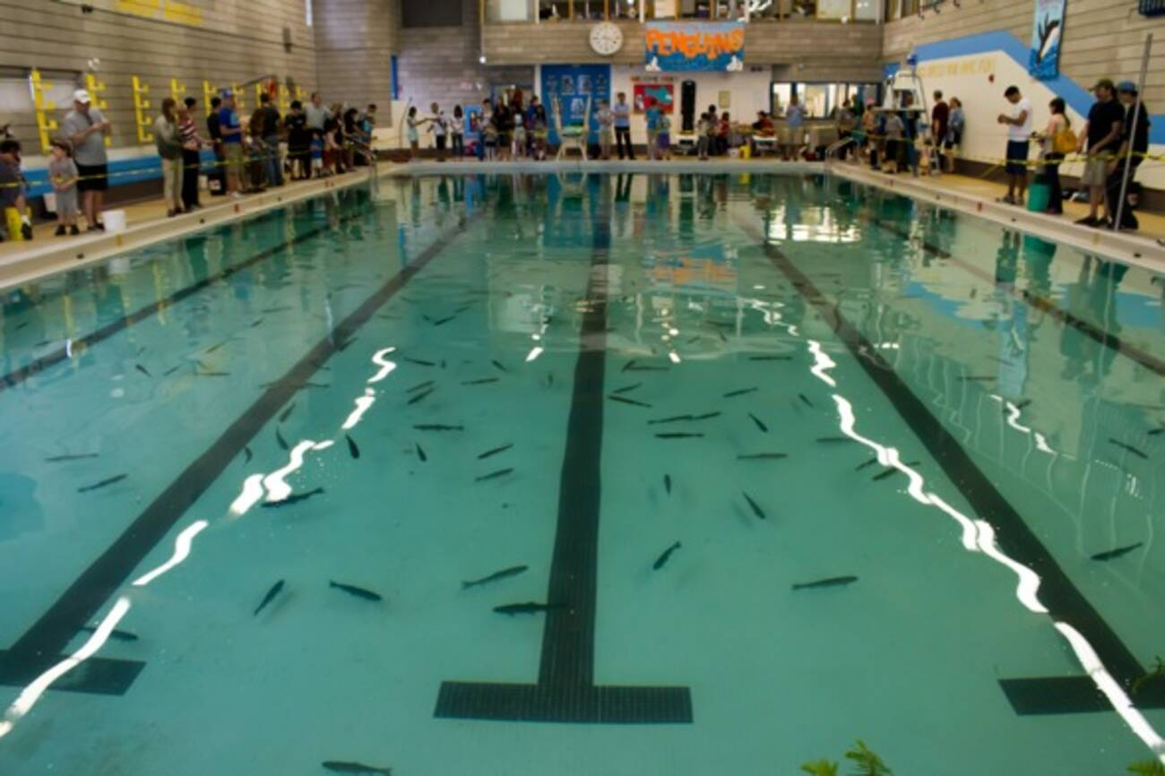 Indoor fishing in toronto in a swimming pool for Pool of fish