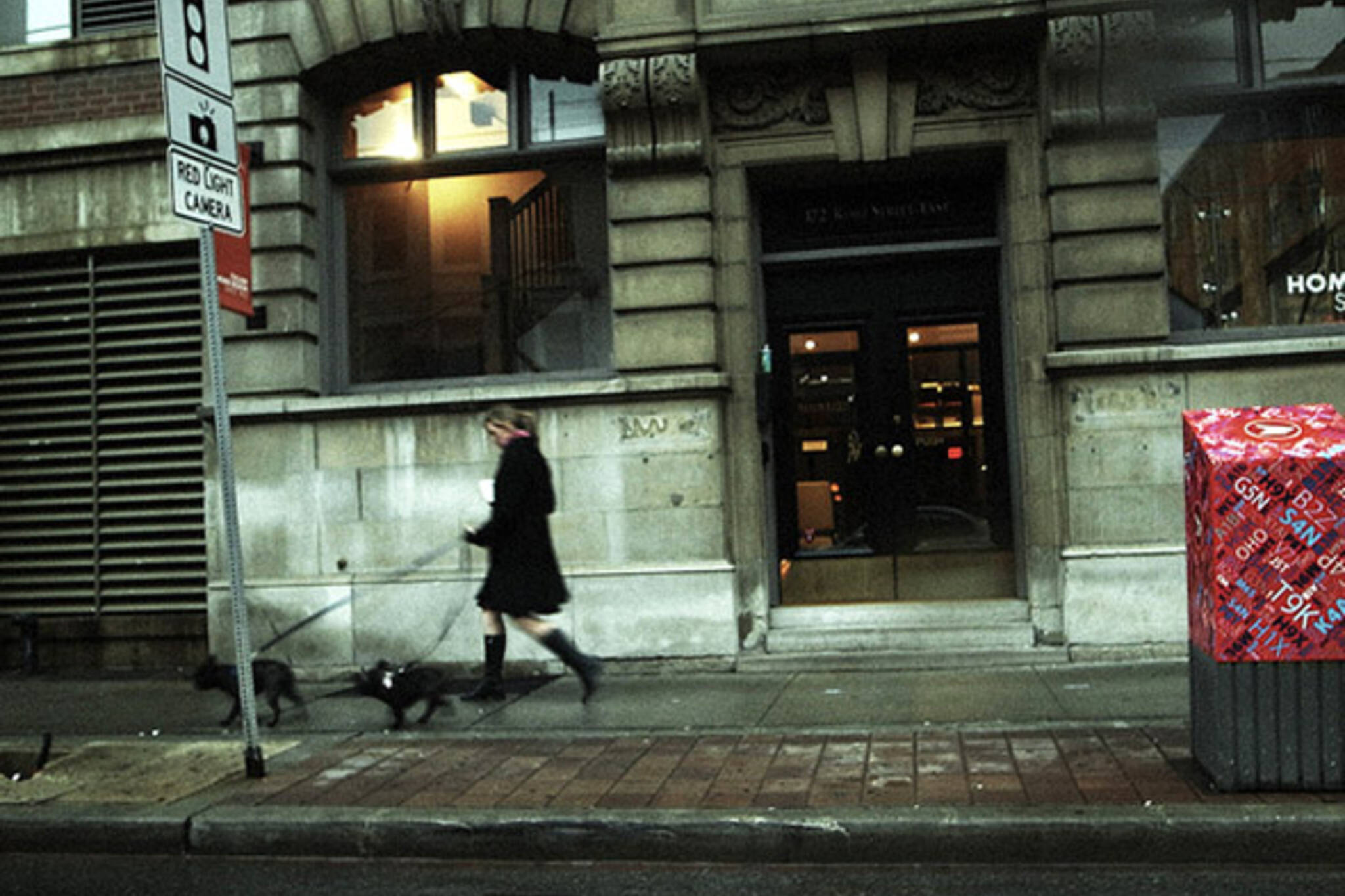 dog, walk, street