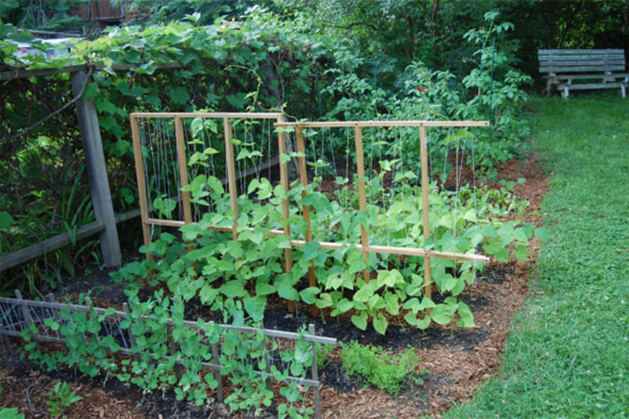 Garden Files Toronto