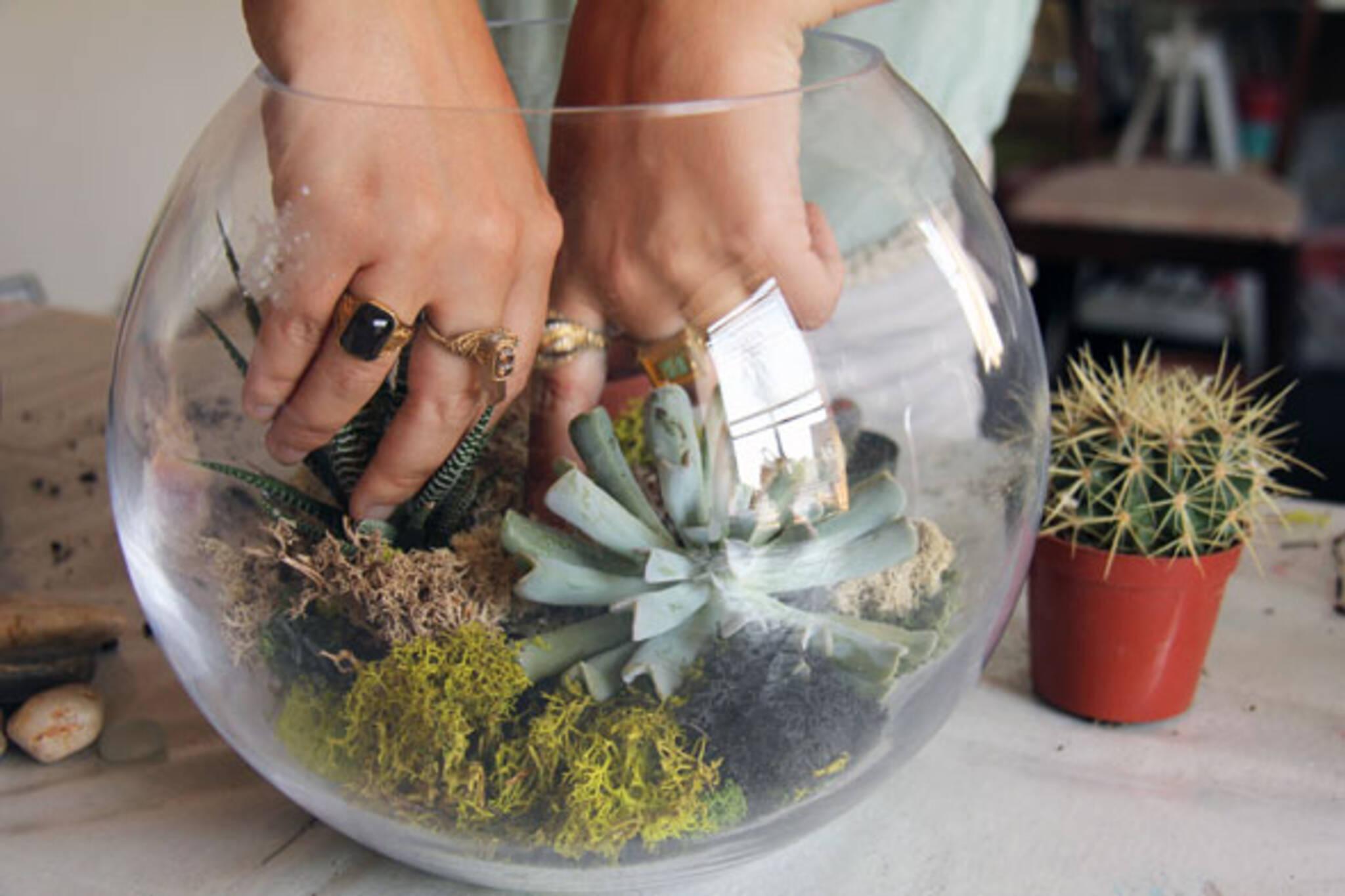 take to the sea terrarium