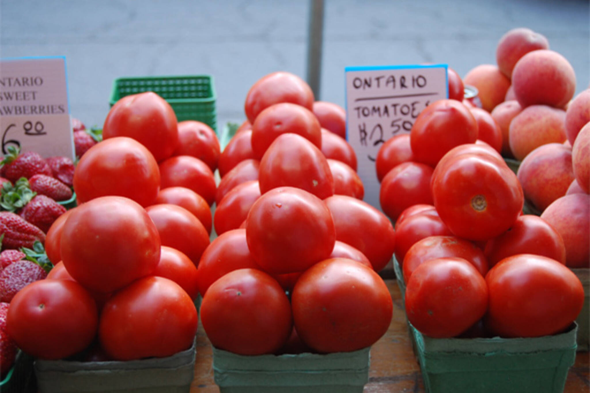 ontario field tomatoes