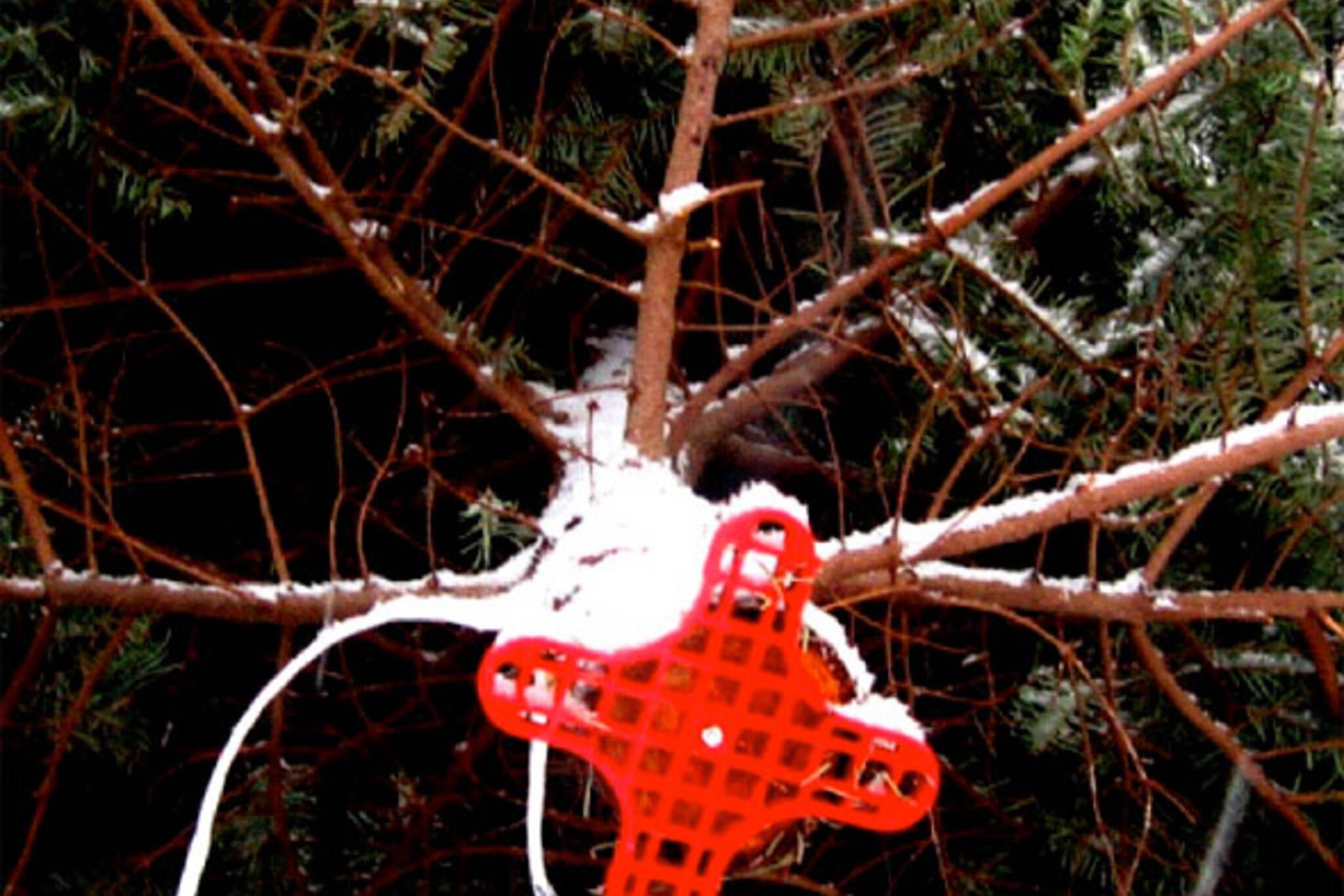 christmas tree pickup toronto